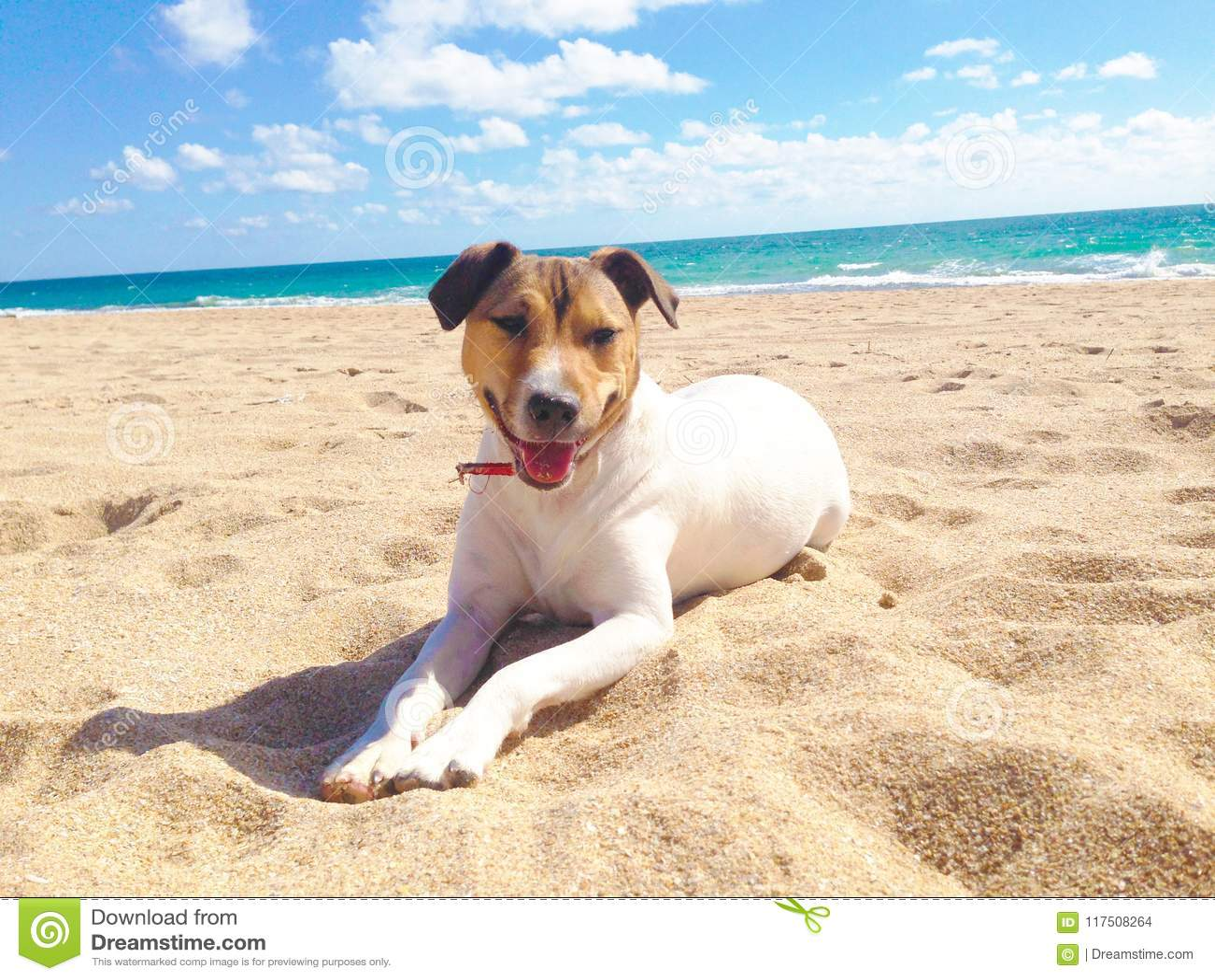 Chien, mer et plage en été