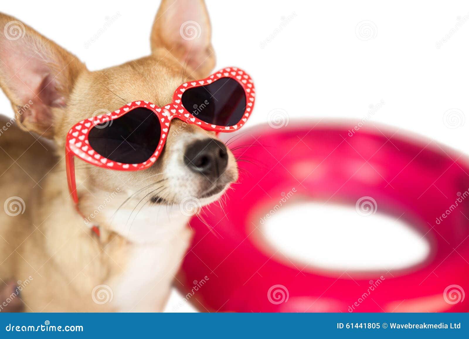 Chien mignon avec des lunettes de soleil de coeur image - Coeur avec des photos ...