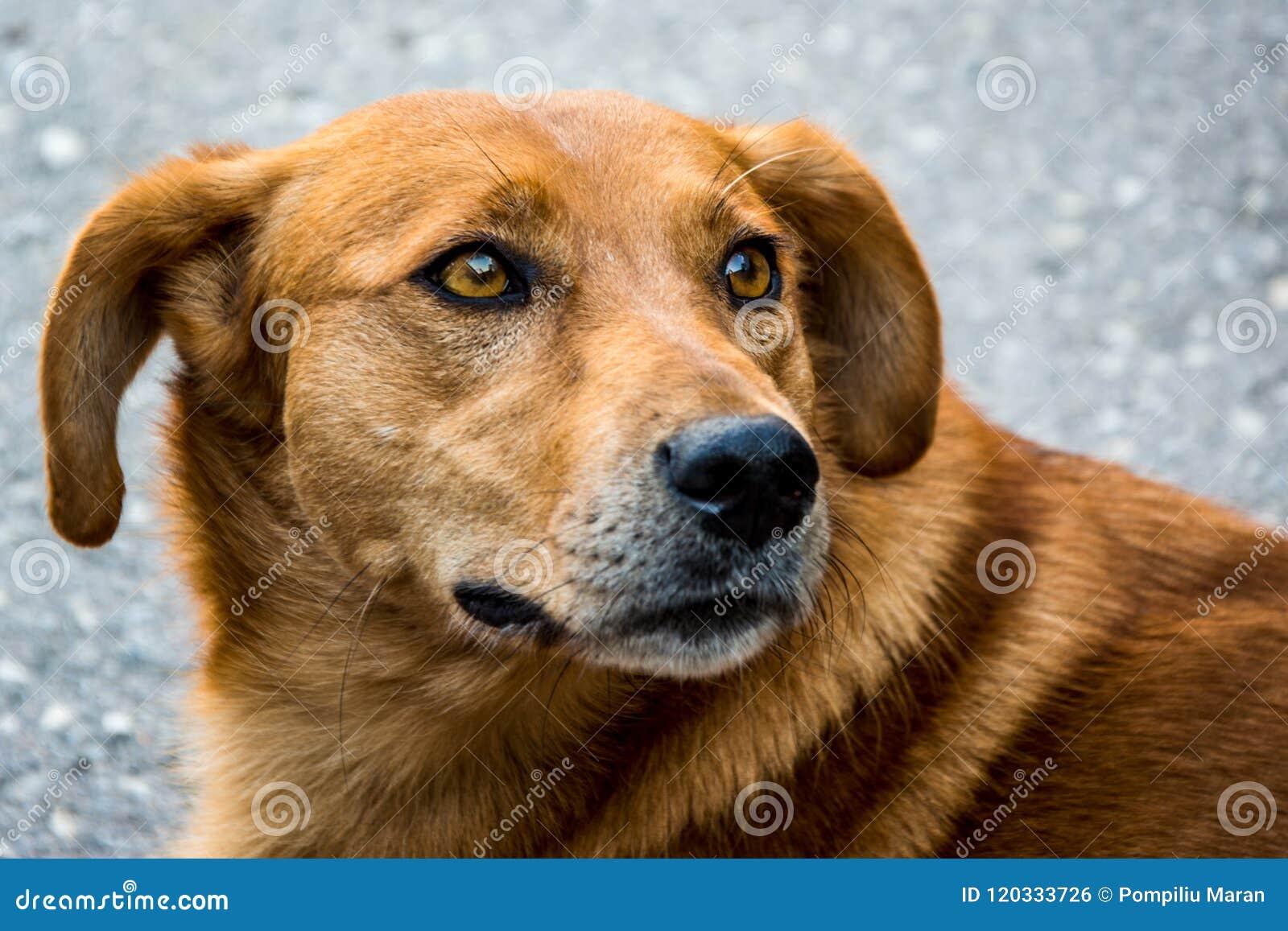 Chien mignon de rue, familiaris de lupus de canis