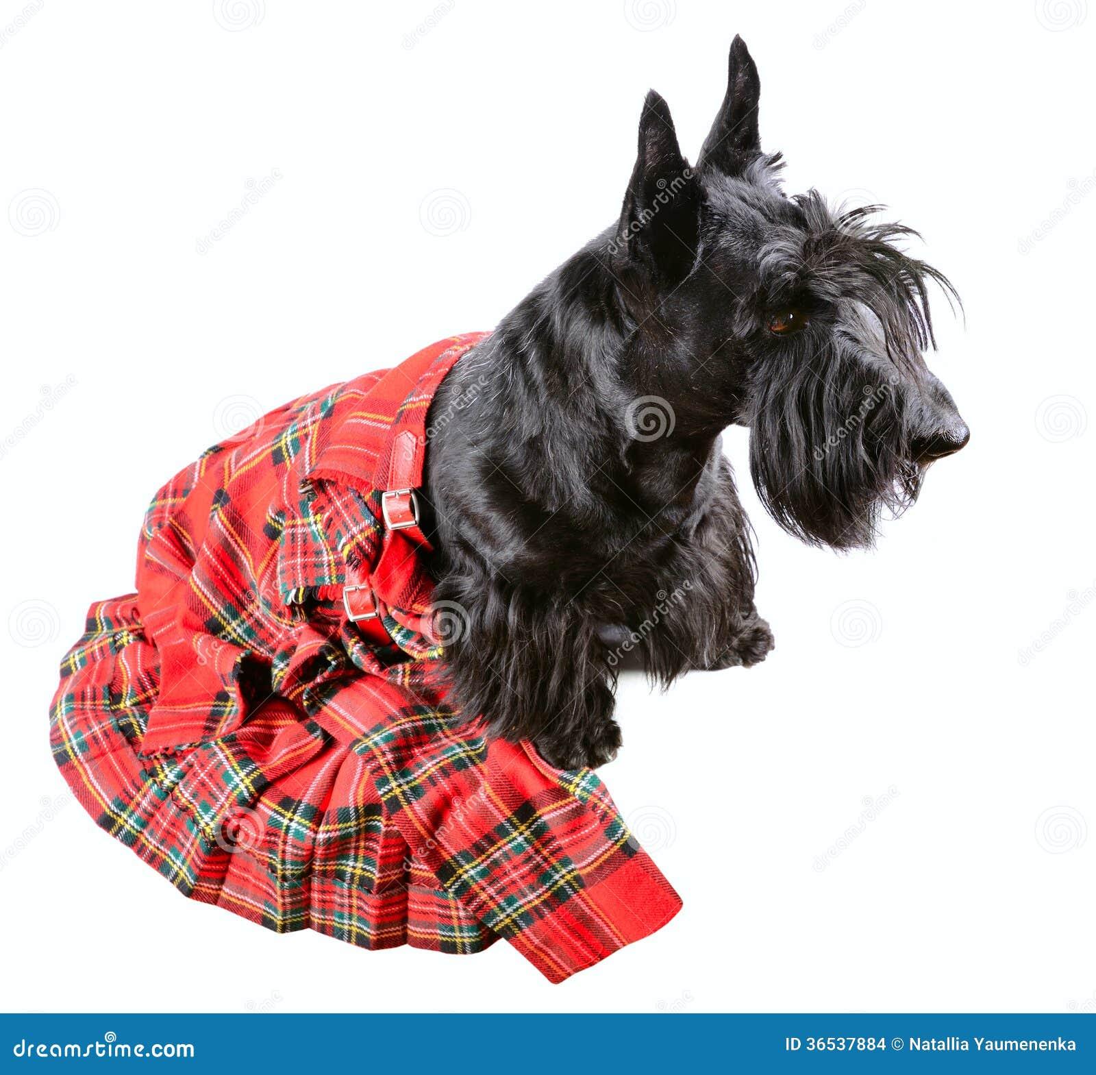 Is A  Yr Old Dog A Puppy