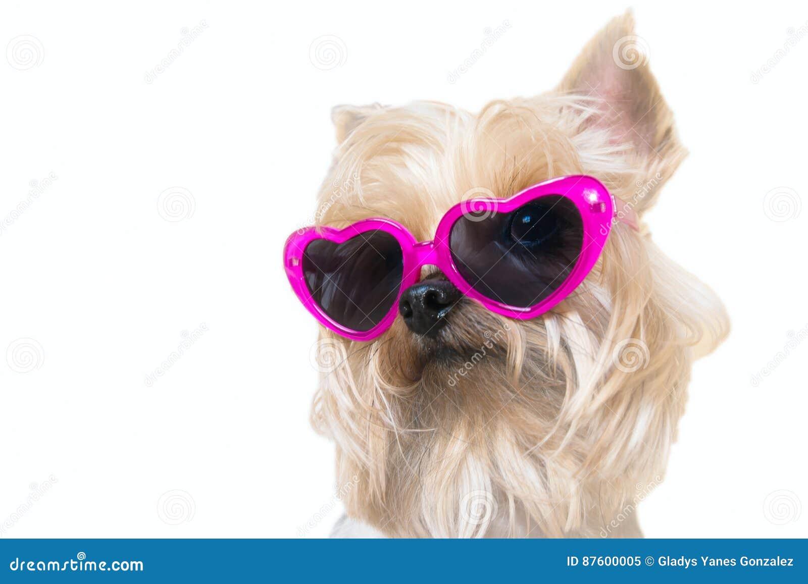 Chien pelucheux avec lunettes de soleil de coeurs