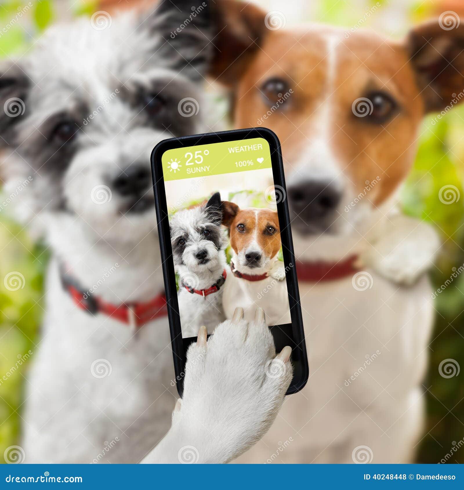 Chiens de Selfie