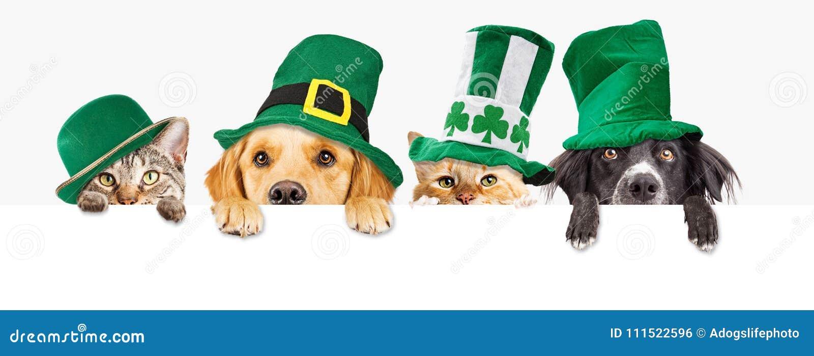 Chiens et chats de jour de St Patricks au-dessus de bannière de Web