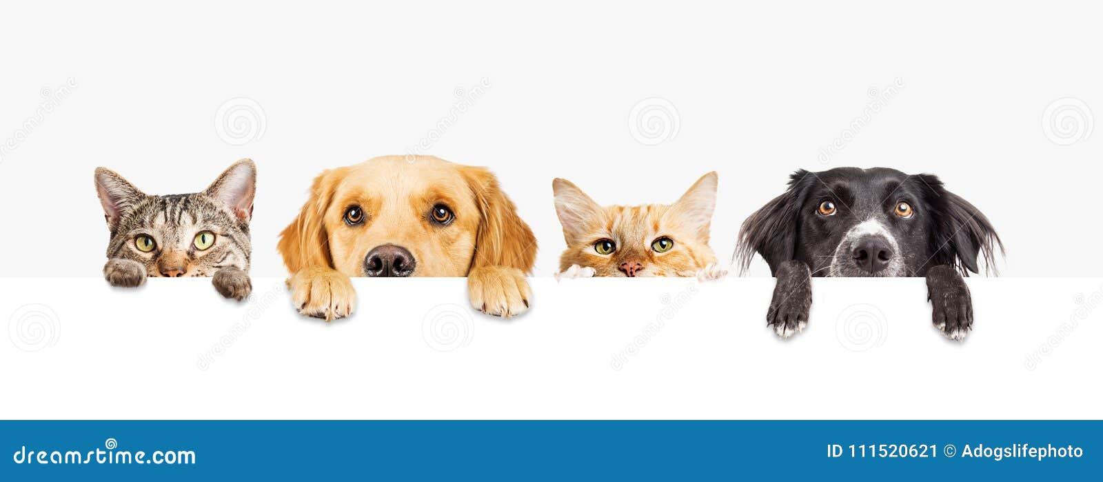 Chiens et chats jetant un coup d oeil au-dessus de la bannière de Web