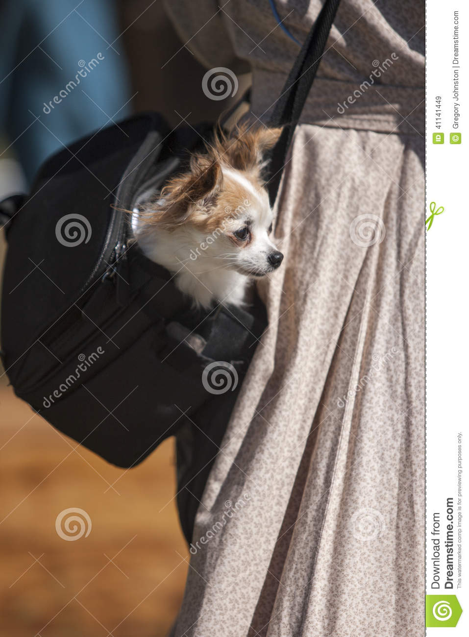 Chihuahua In A Bag Stock Photo Image 41141449