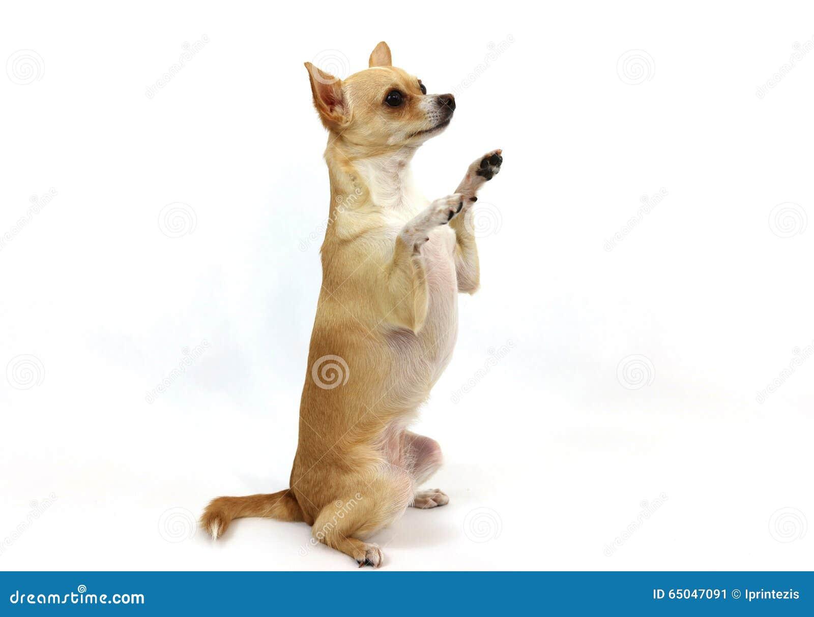 Dog Camera And Treat