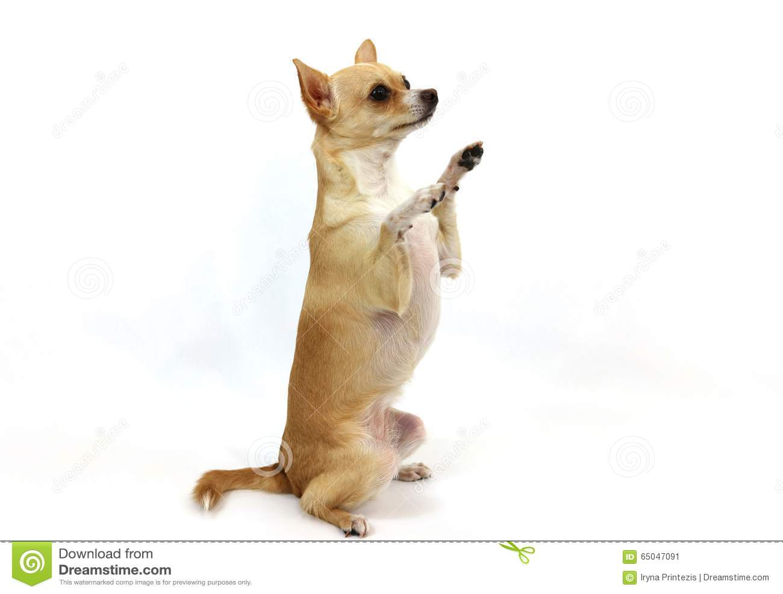 Dog Treat Business