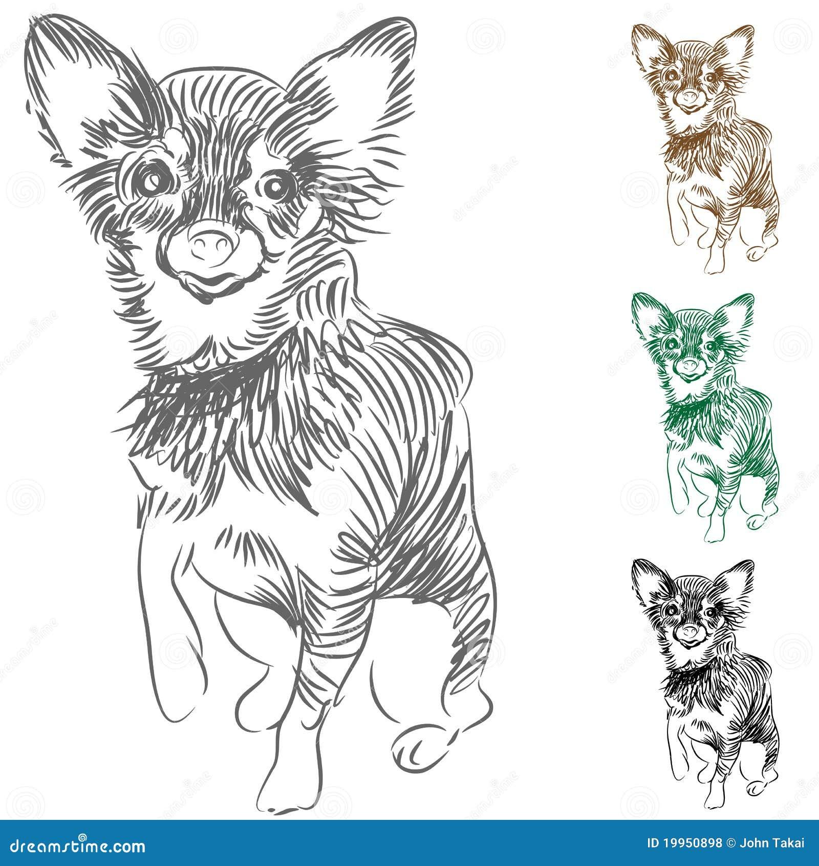 Chihuahua Dog Drawing Stock Vector Illustration Of Small