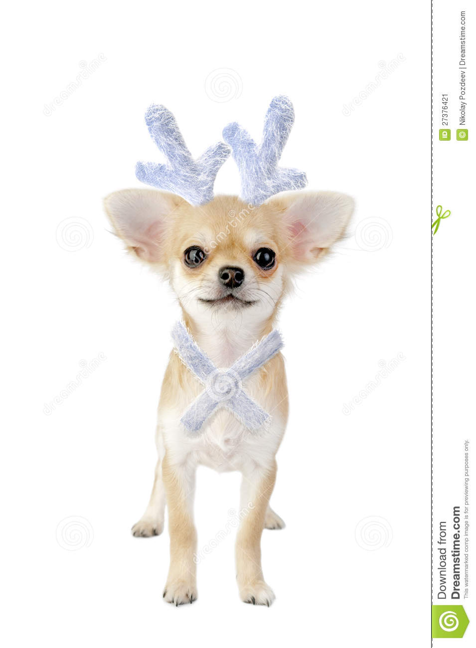 Chihuahua Puppy With Antlers As Christmas Reindeer Stock Image