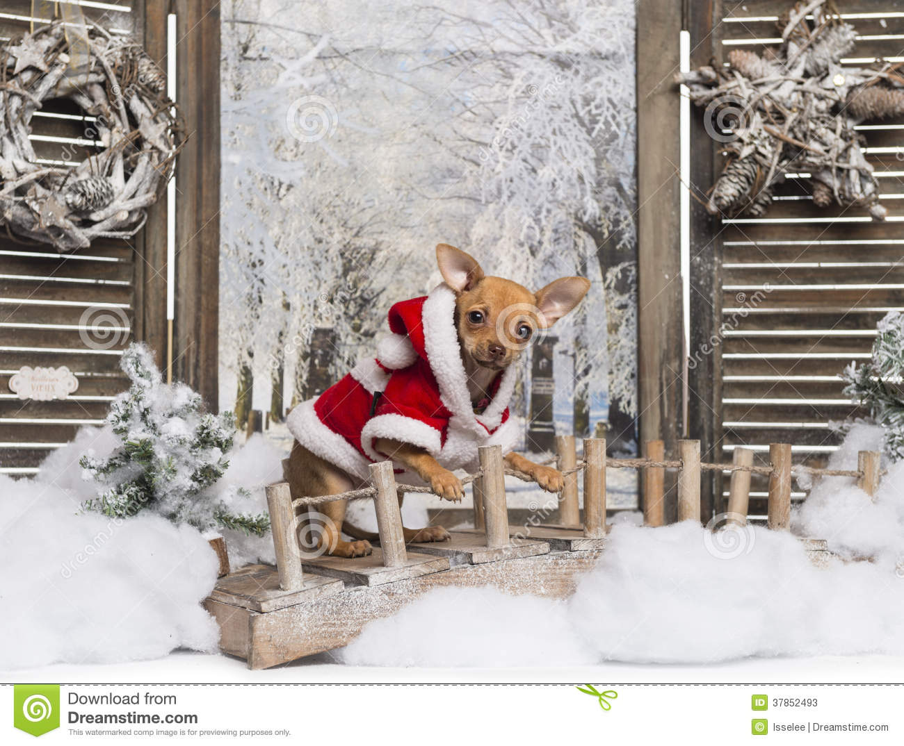 Chihuahua puppy wearing a christmas suit in a winter scenery