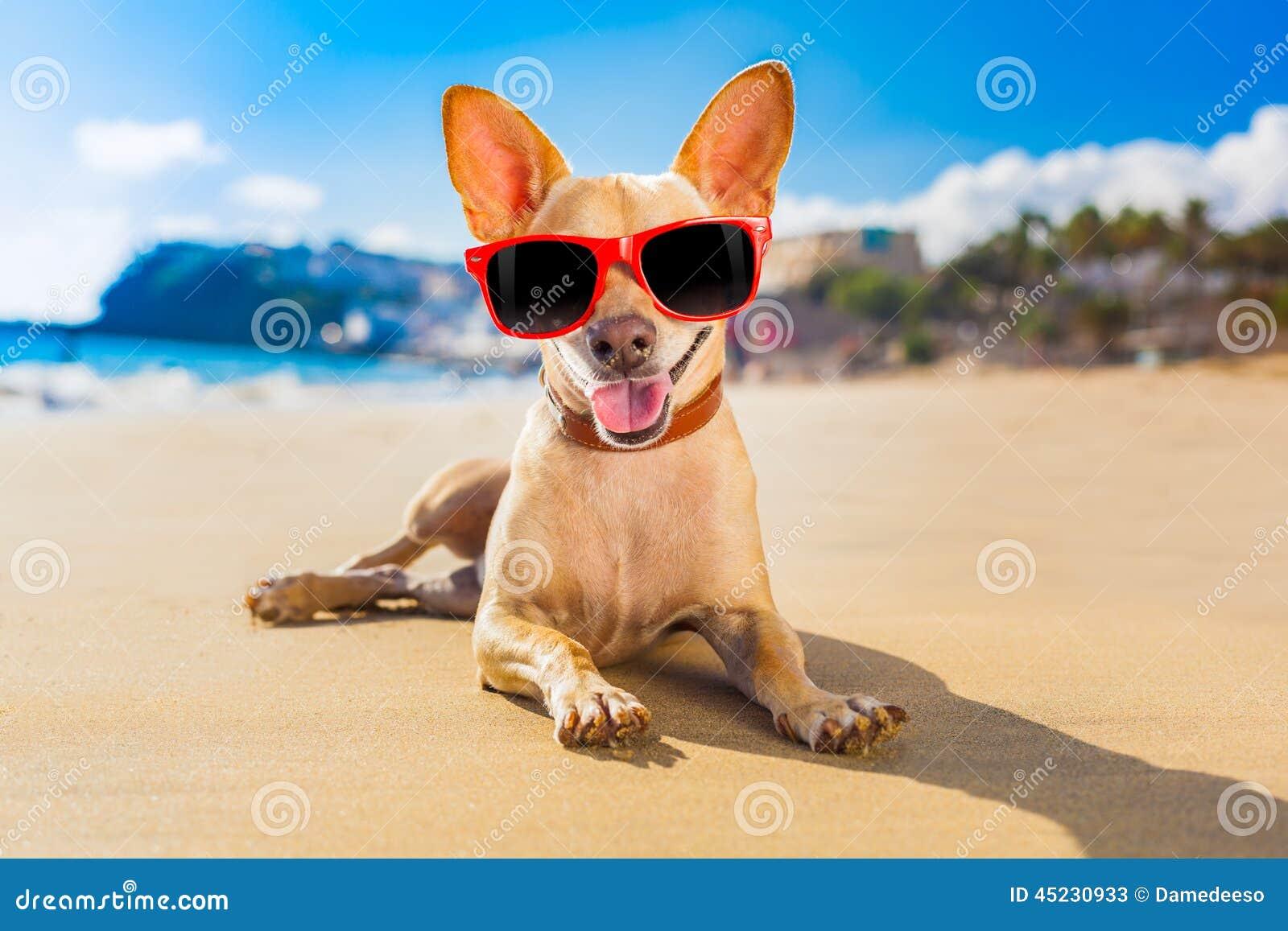 chihuahua summer dog stock photo image 45230933 clip art sunglasses cool clipart sunglasses black and white