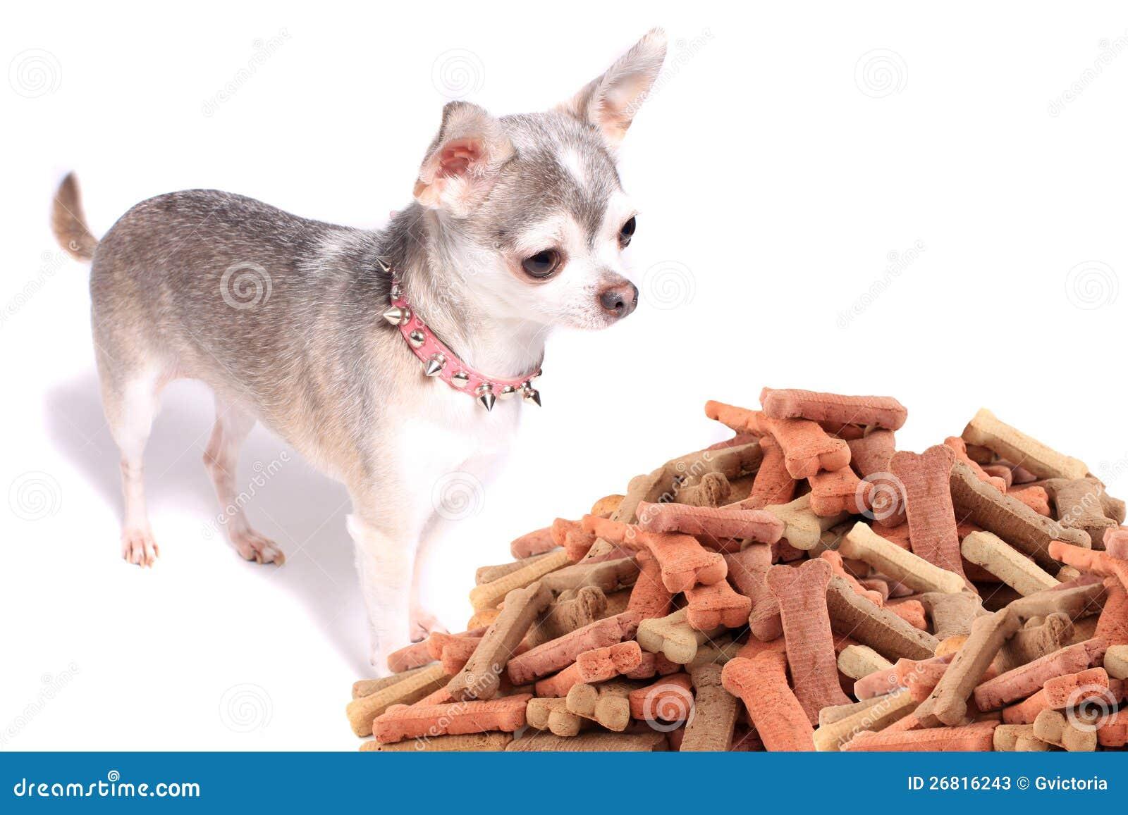 Chihuahuahund och treats
