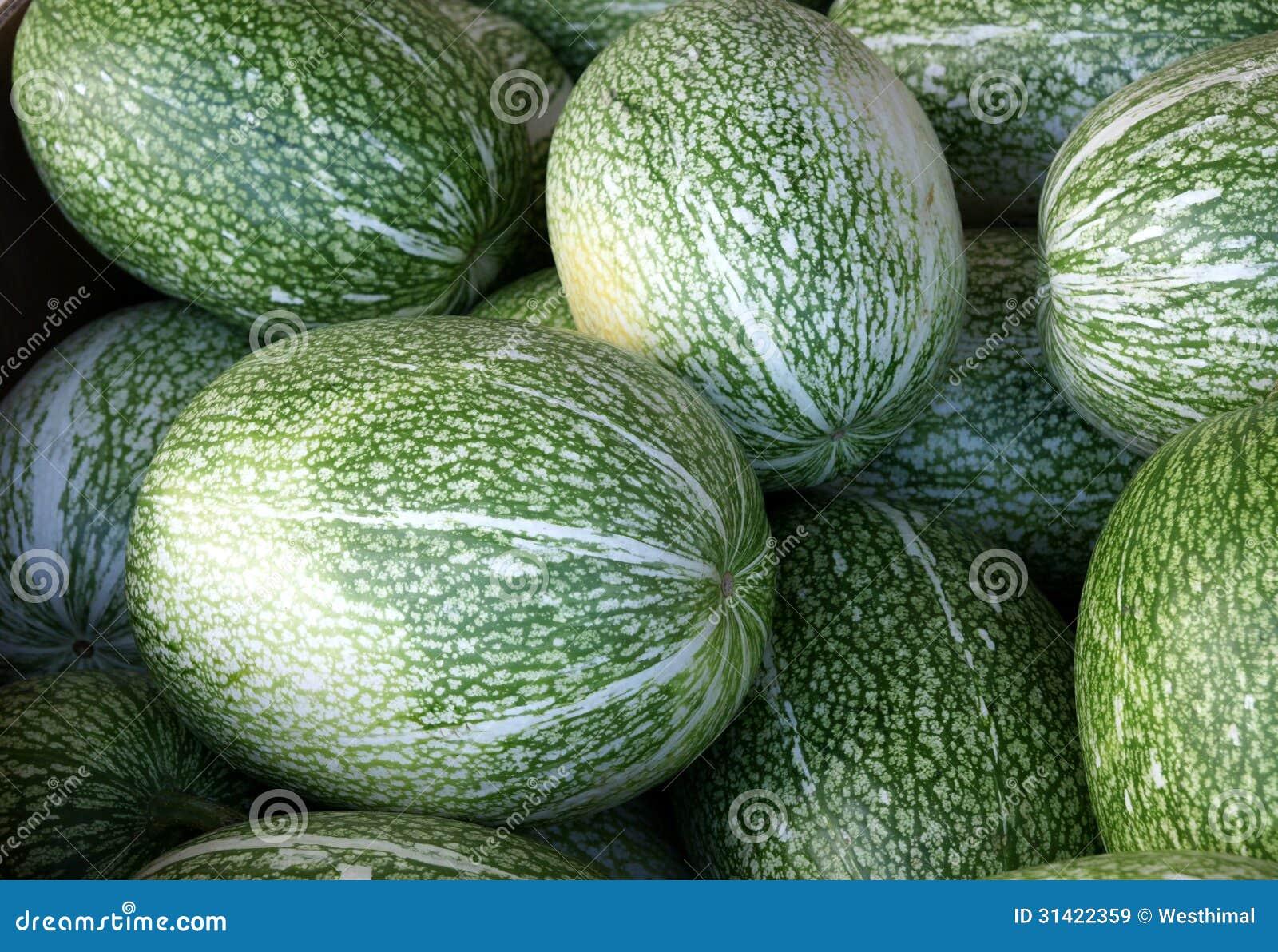 Chilacayota, shark-fin melon, Malabar gourd, Cucurbita ficifolia, with ...