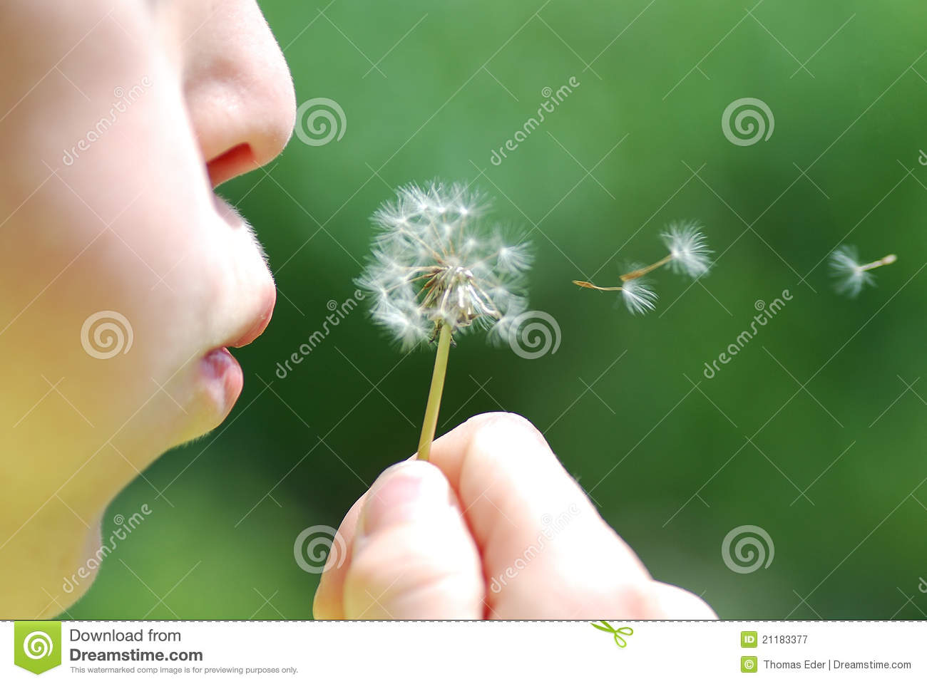 Child and blowball