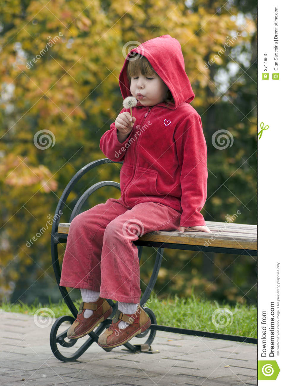 Child With Dandelion Sitting On Bench Stock Image Image