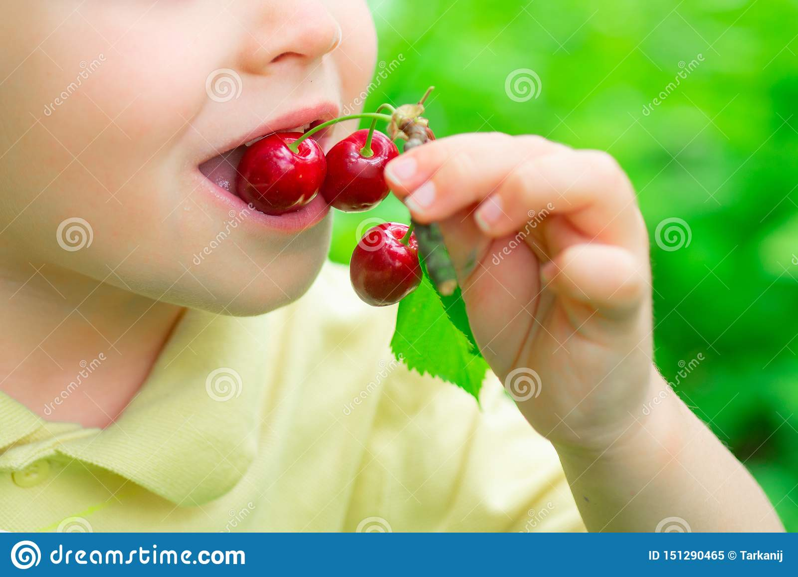 The child eats cherries. Healthy food. Fruits in the garden. Vitamins for children. Nature and harvest.