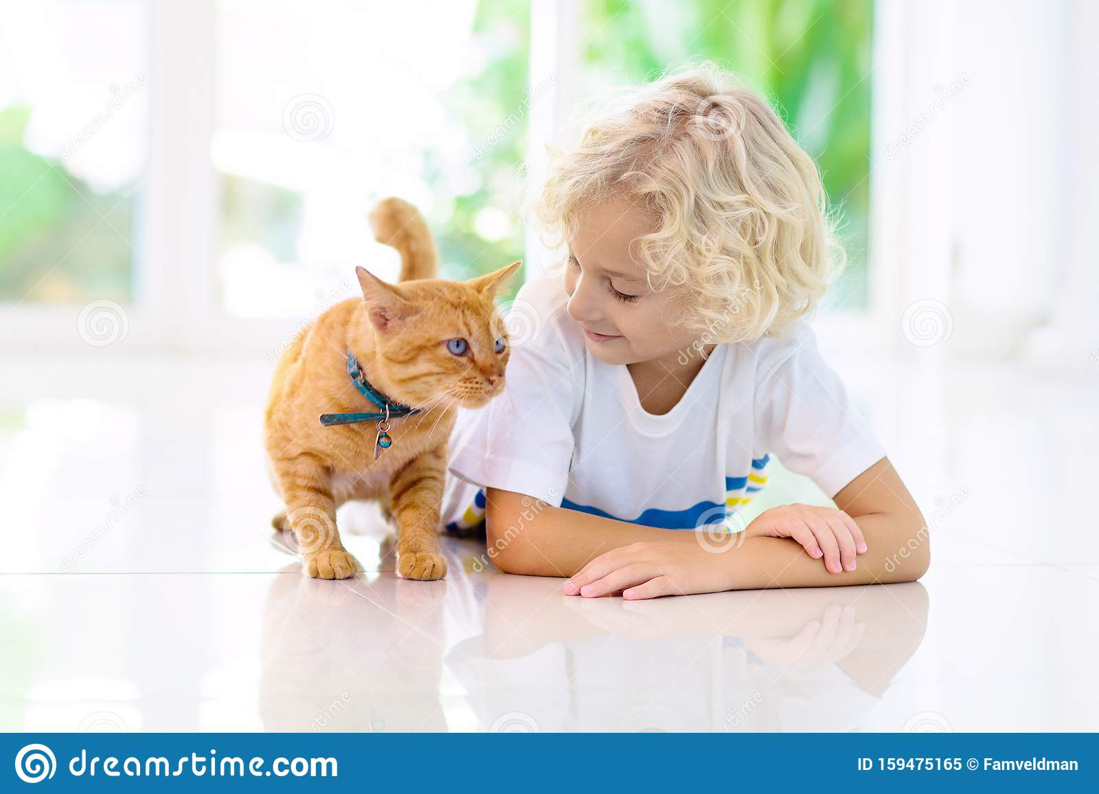 Child Feeding Home Cat Kids And Pets Stock Image Image Of Domestic Kitten 159475165