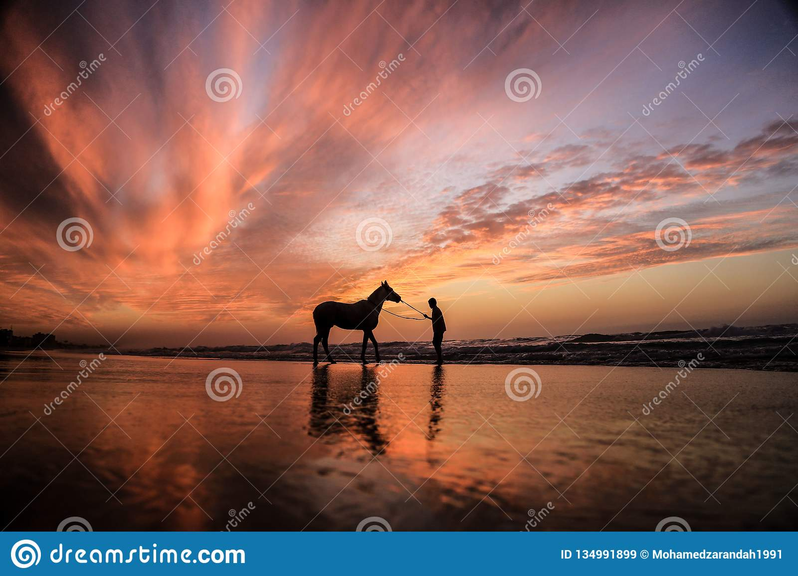 A child with a horse at sunset