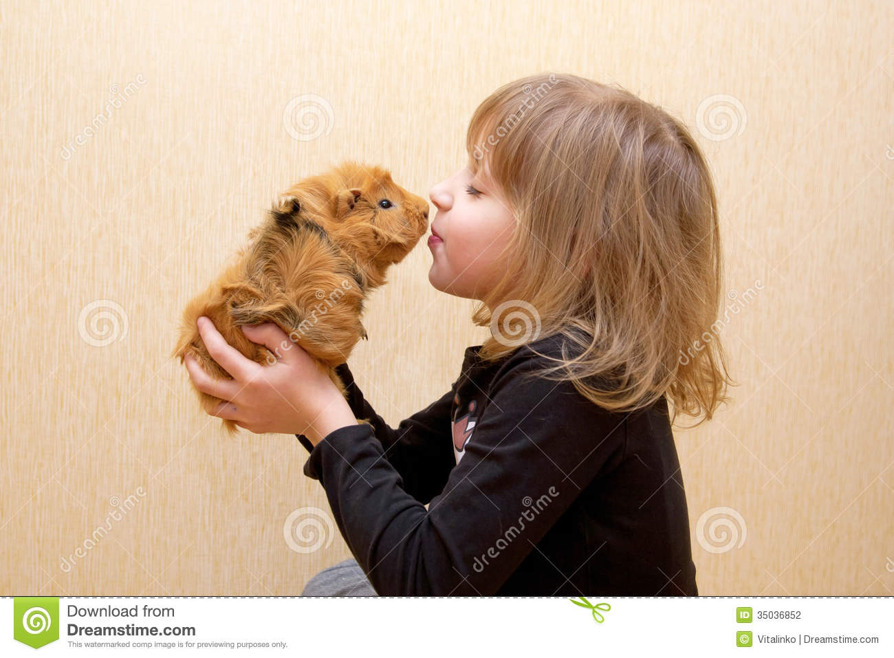 Child Kissing Guinea Pig. Love For Animals Stock Photography - Image ...