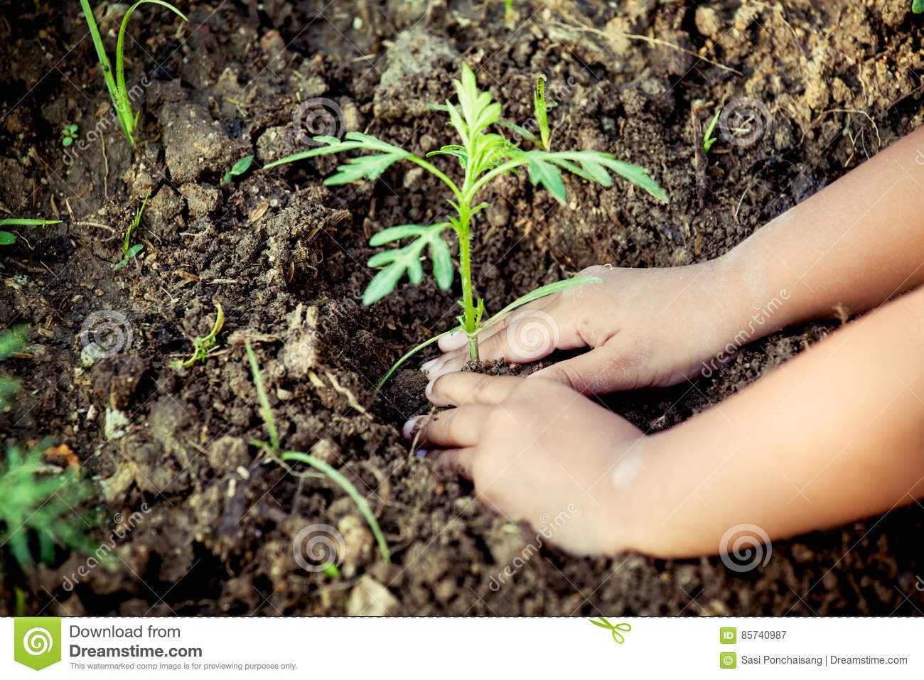 Child little girl hand planting young tree on black soil