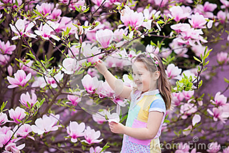 Child With Magnolia Flower Little Girl With Flowers Stock Image
