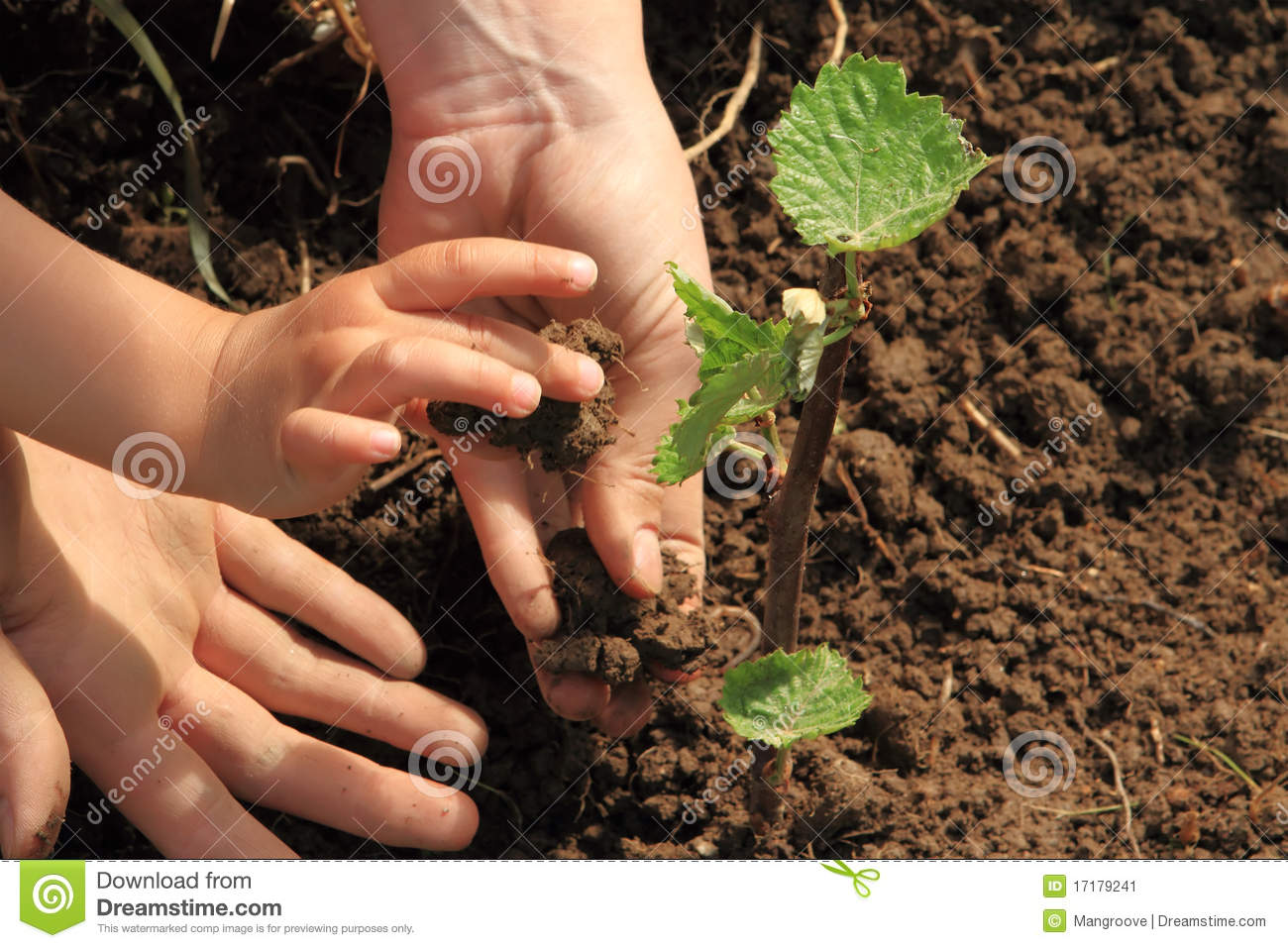Child and mom hands planting vine