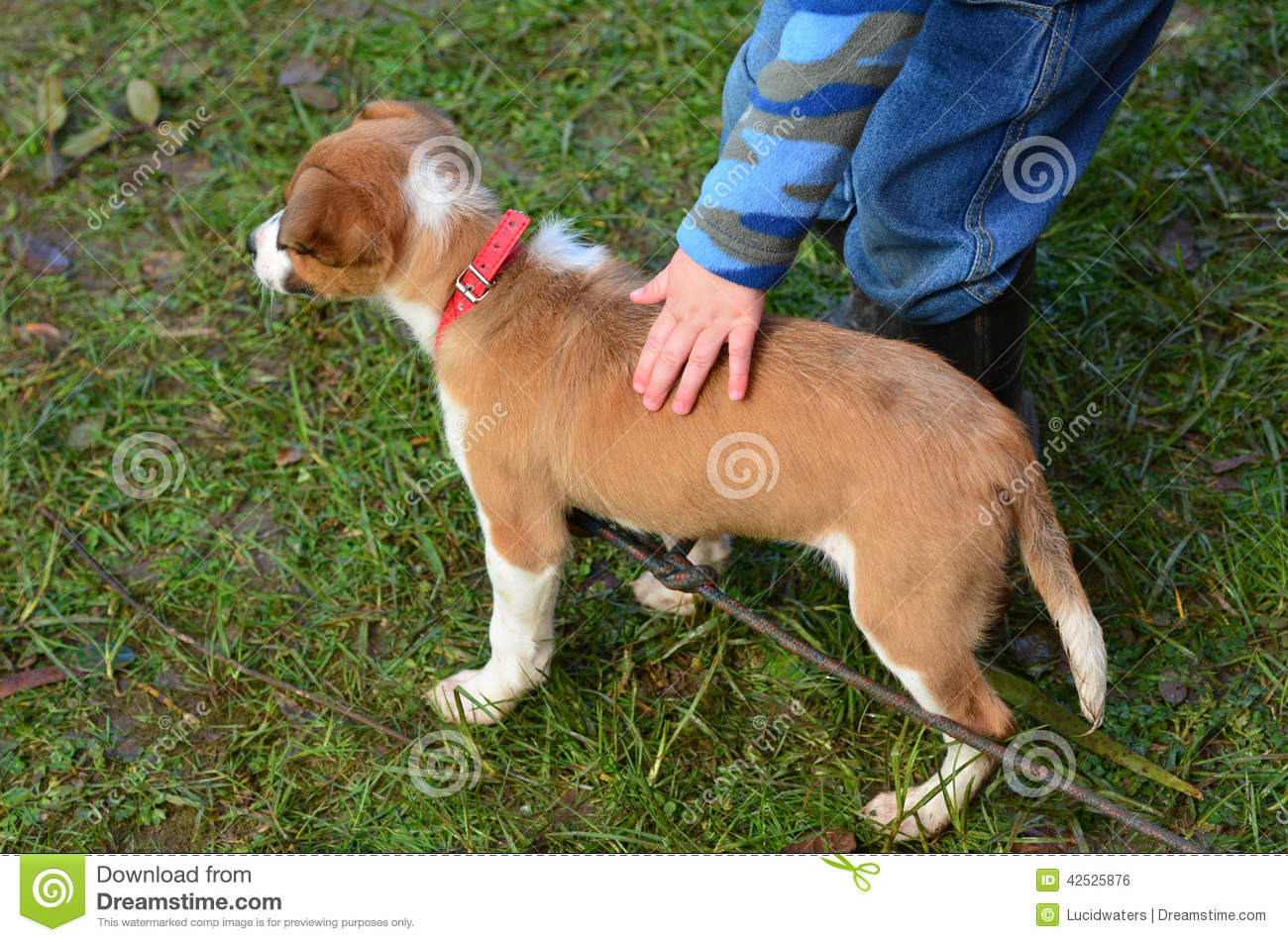 Friends Pat The Dog