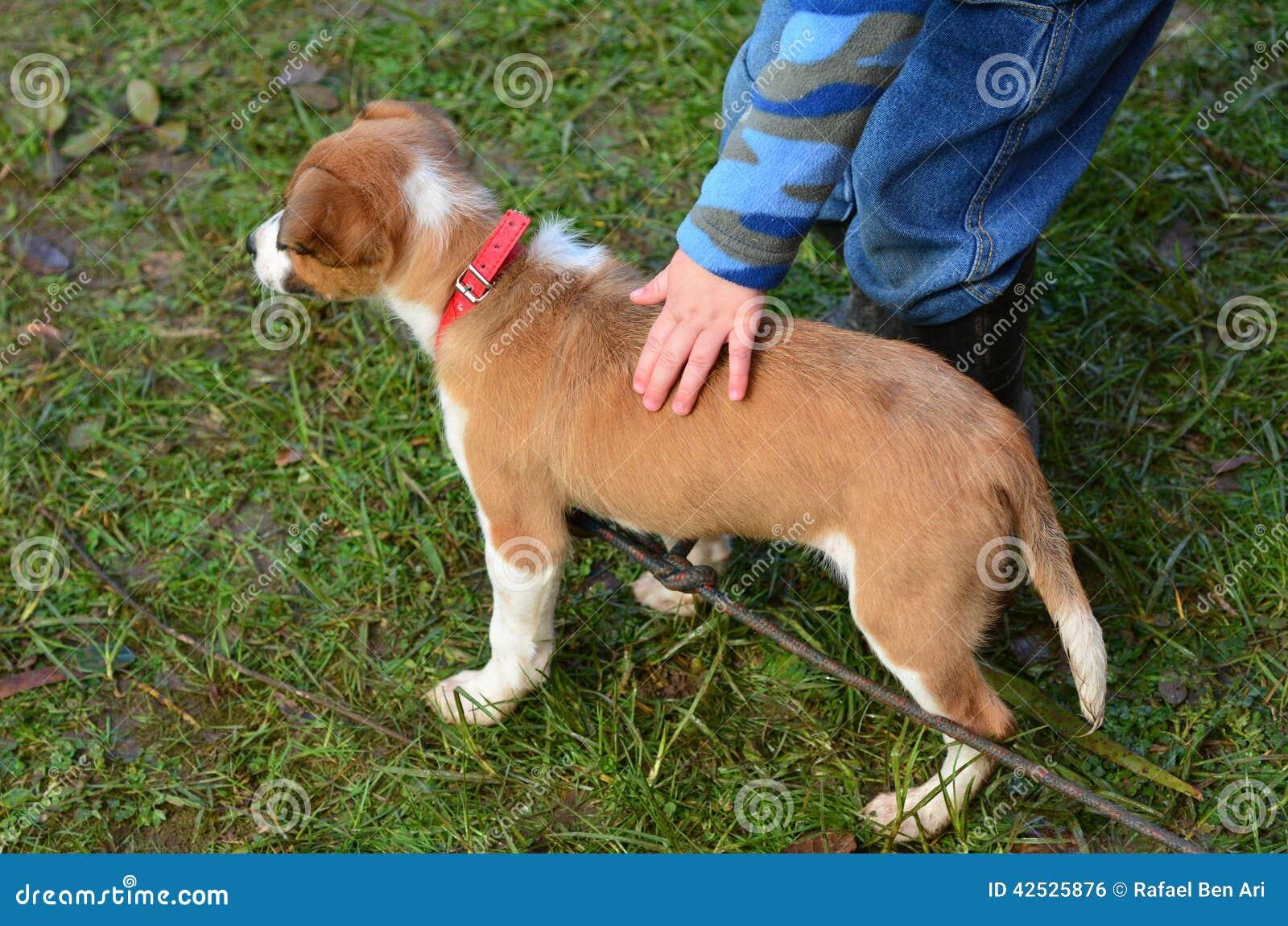 Small Natural Looking Dog