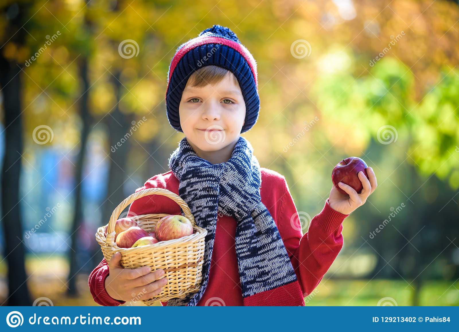 Child picking apples in autumn. Little baby boy playing in apple tree orchard. Kids pick fruit in a basket. Toddler eating fruits