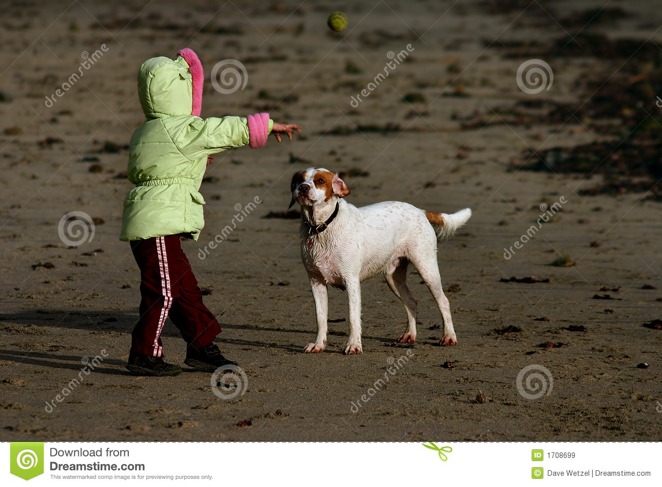 Child playing fetch with his dog at the beach