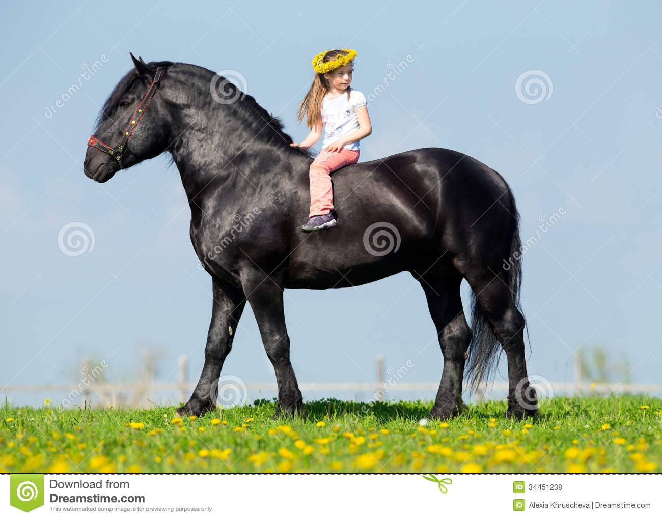 635 Draft Horse Riding Photos Free Royalty Free Stock Photos From Dreamstime