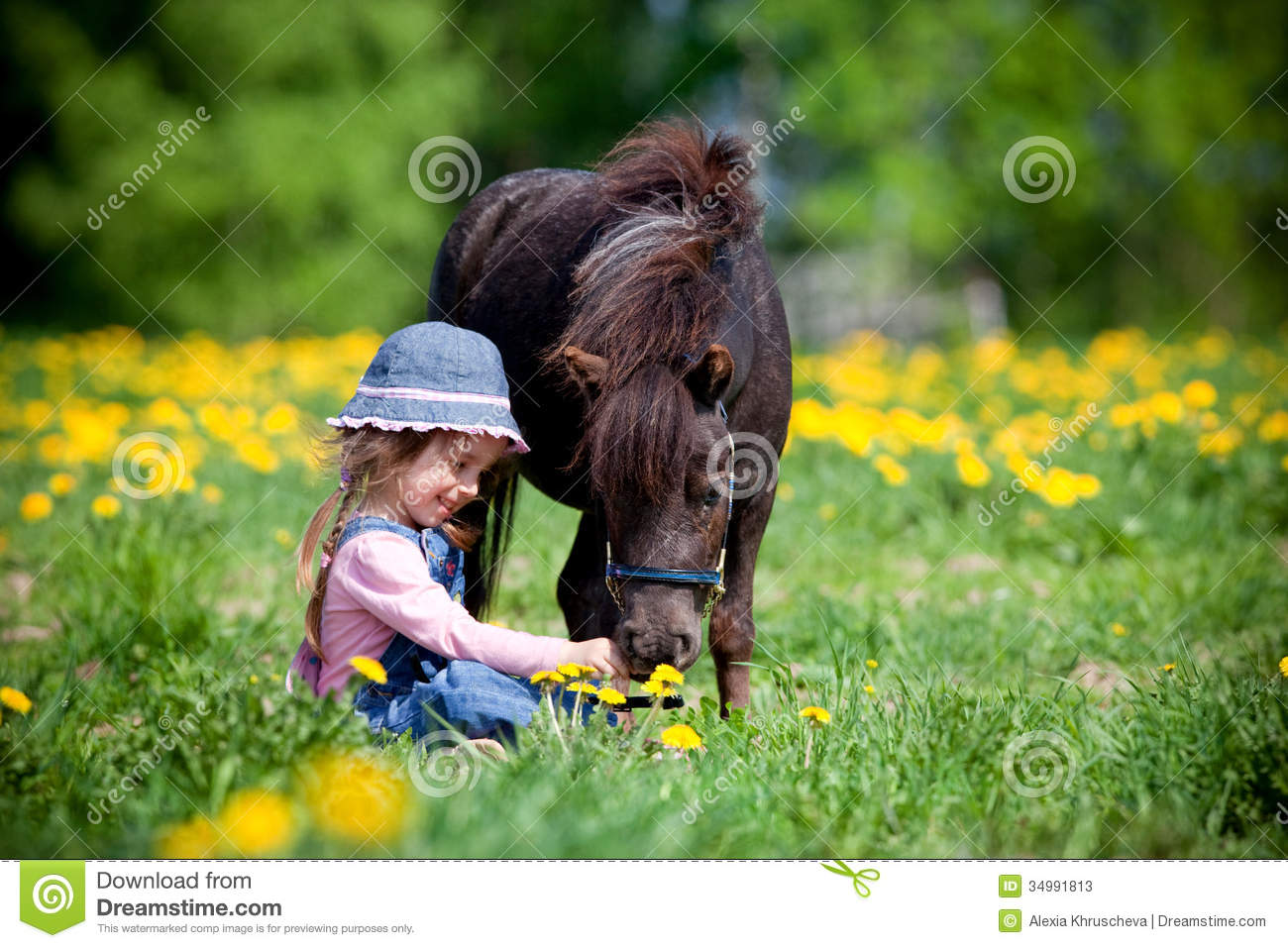 Child And Small Horse In Field Stock Photos Image 34991813