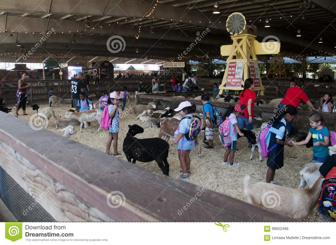 Sheep and goats at Petting Zoo exhibit at the Los Angeles County Fair in Pomona