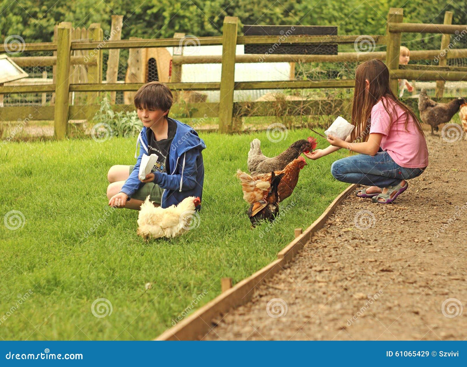 Nature S Hen House Farm
