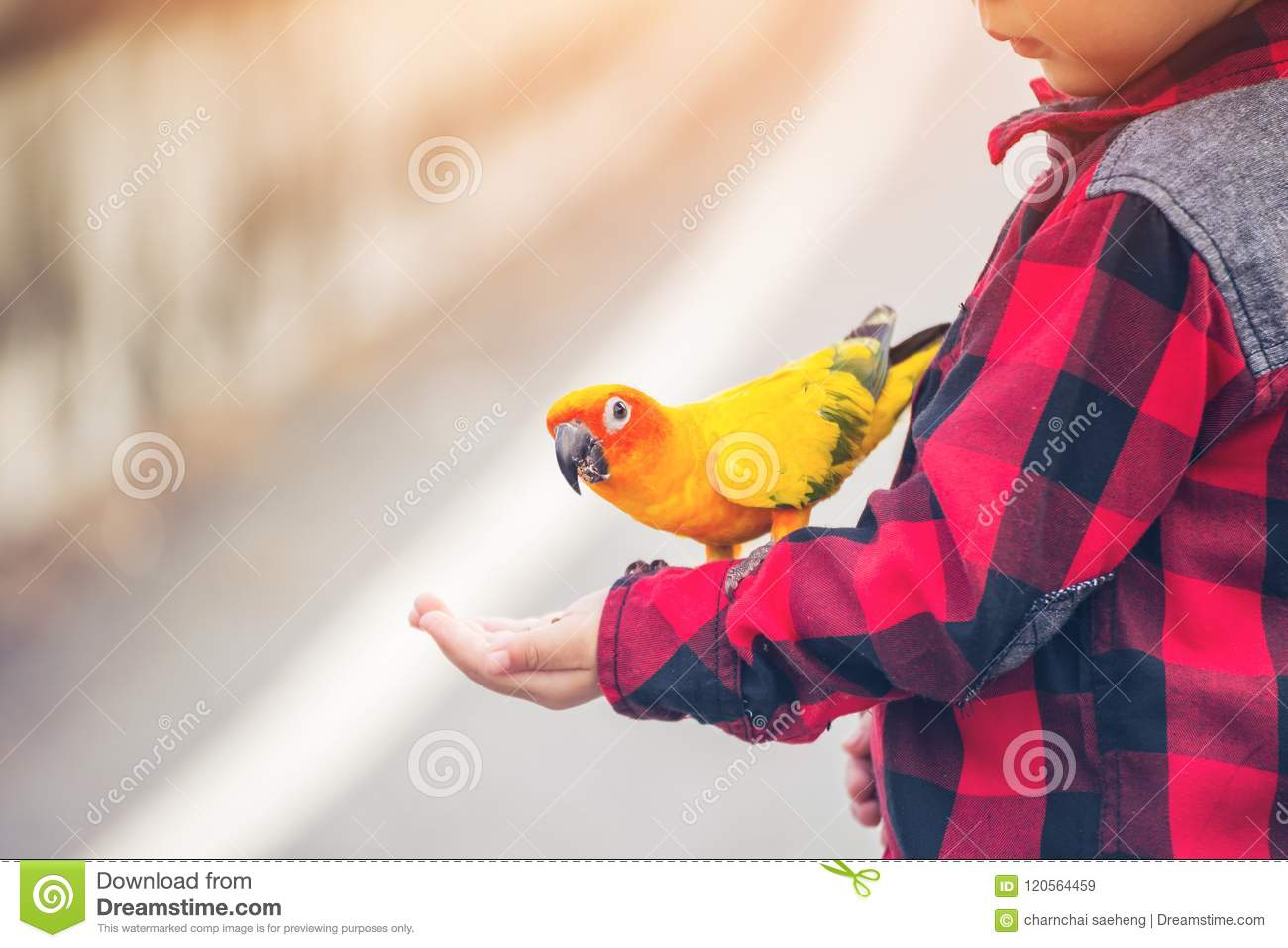 Children give a food for a bird in the park.