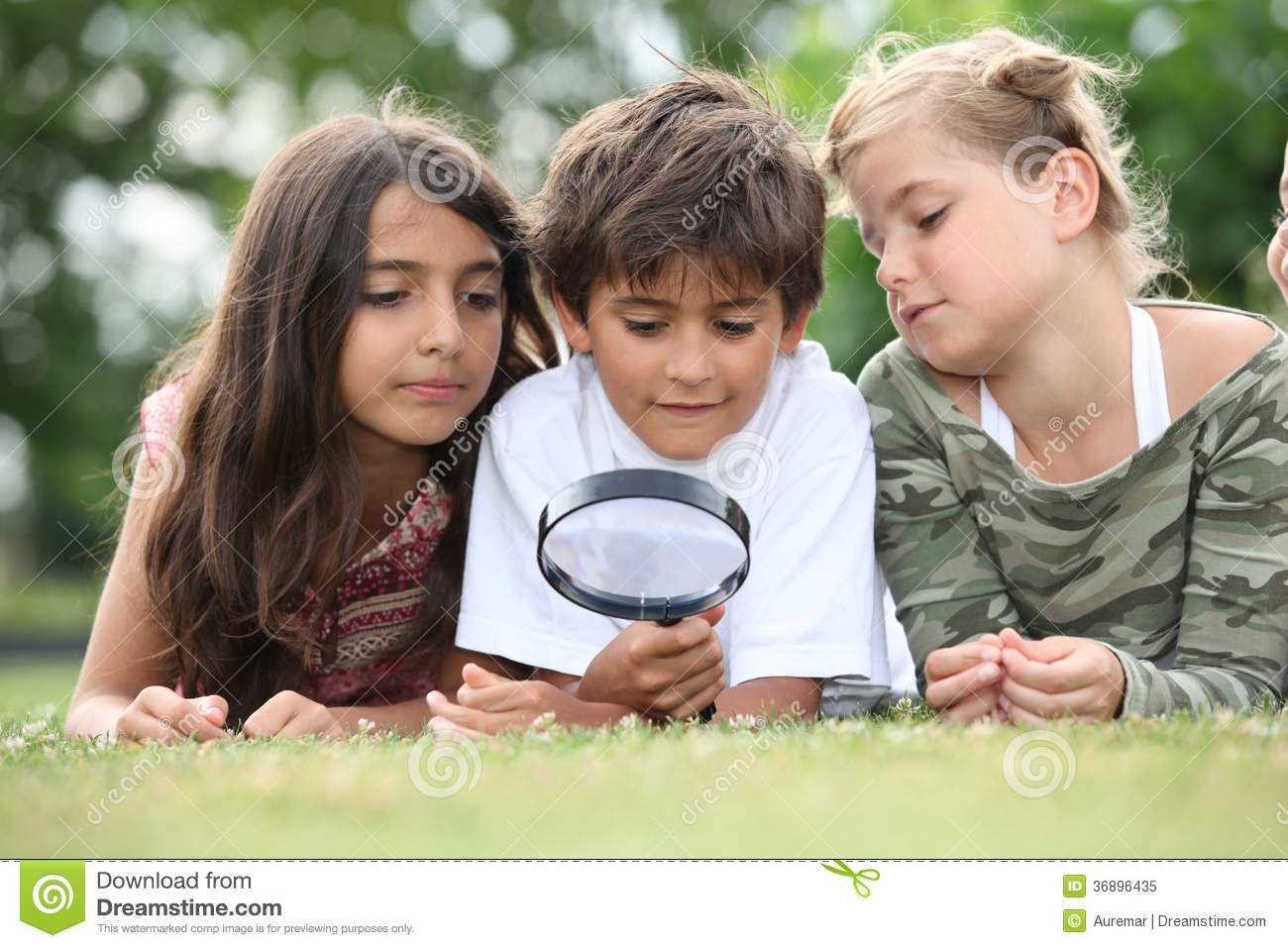 Children looking at insects