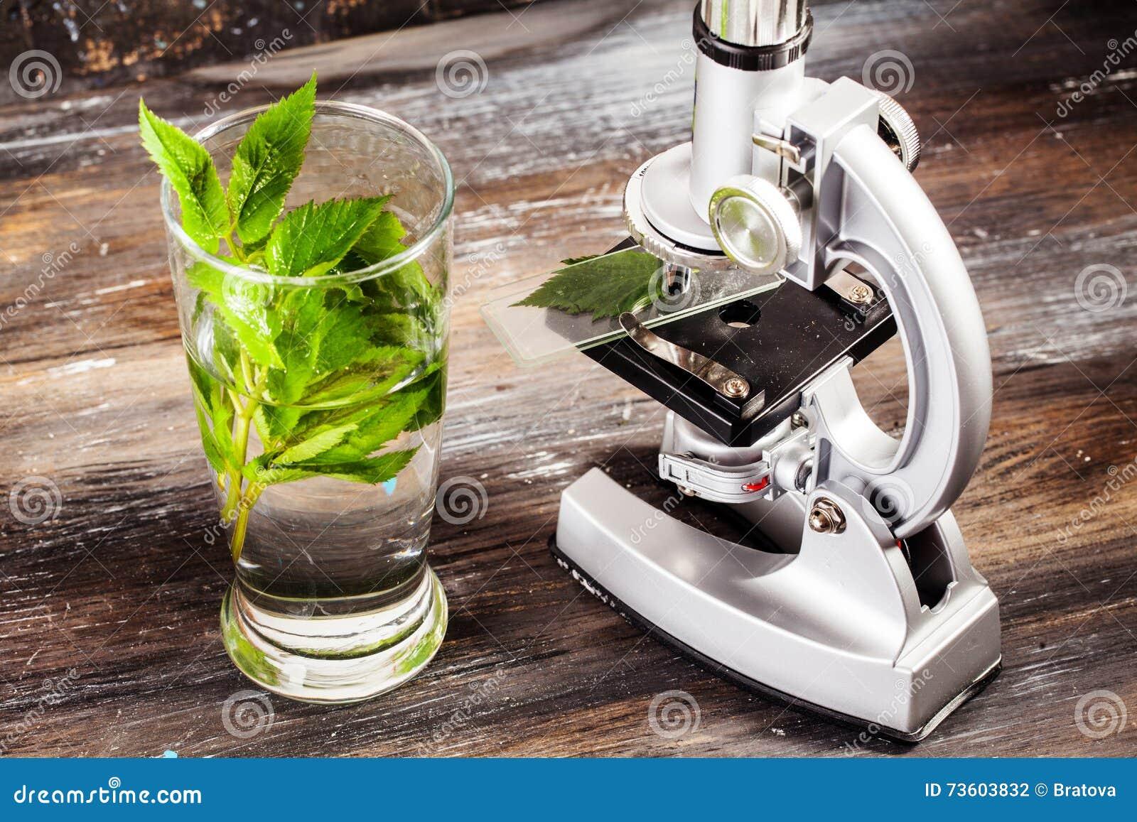 Children mikroskop w spokojnych życie stołu liściach roślina