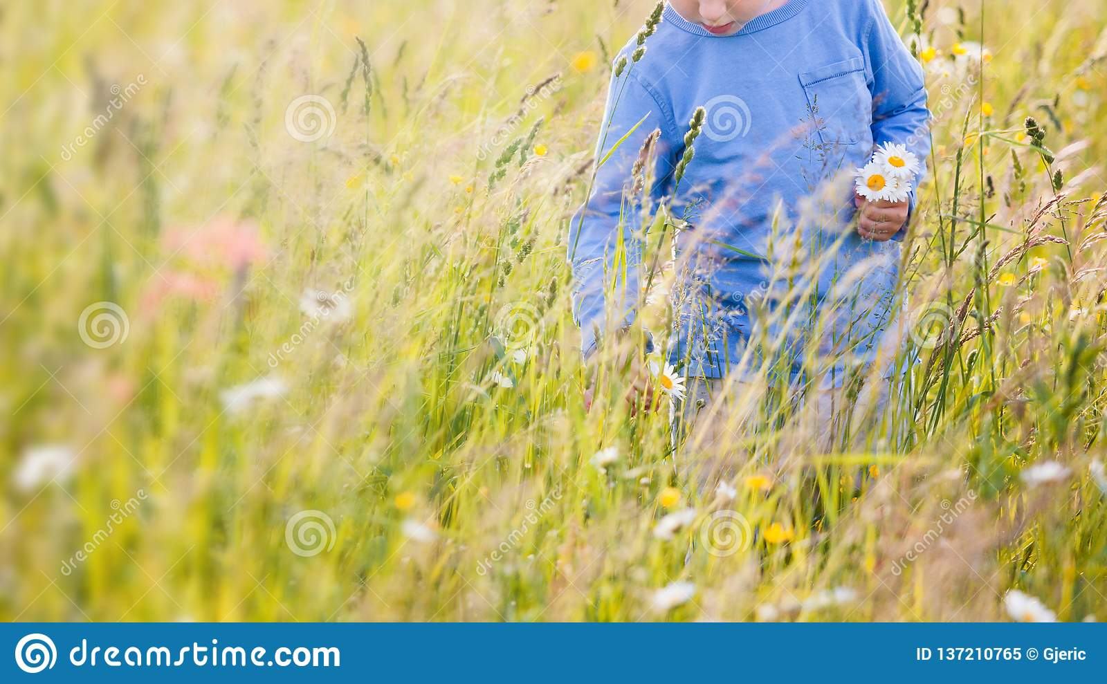 Children picking flowers on a meadow
