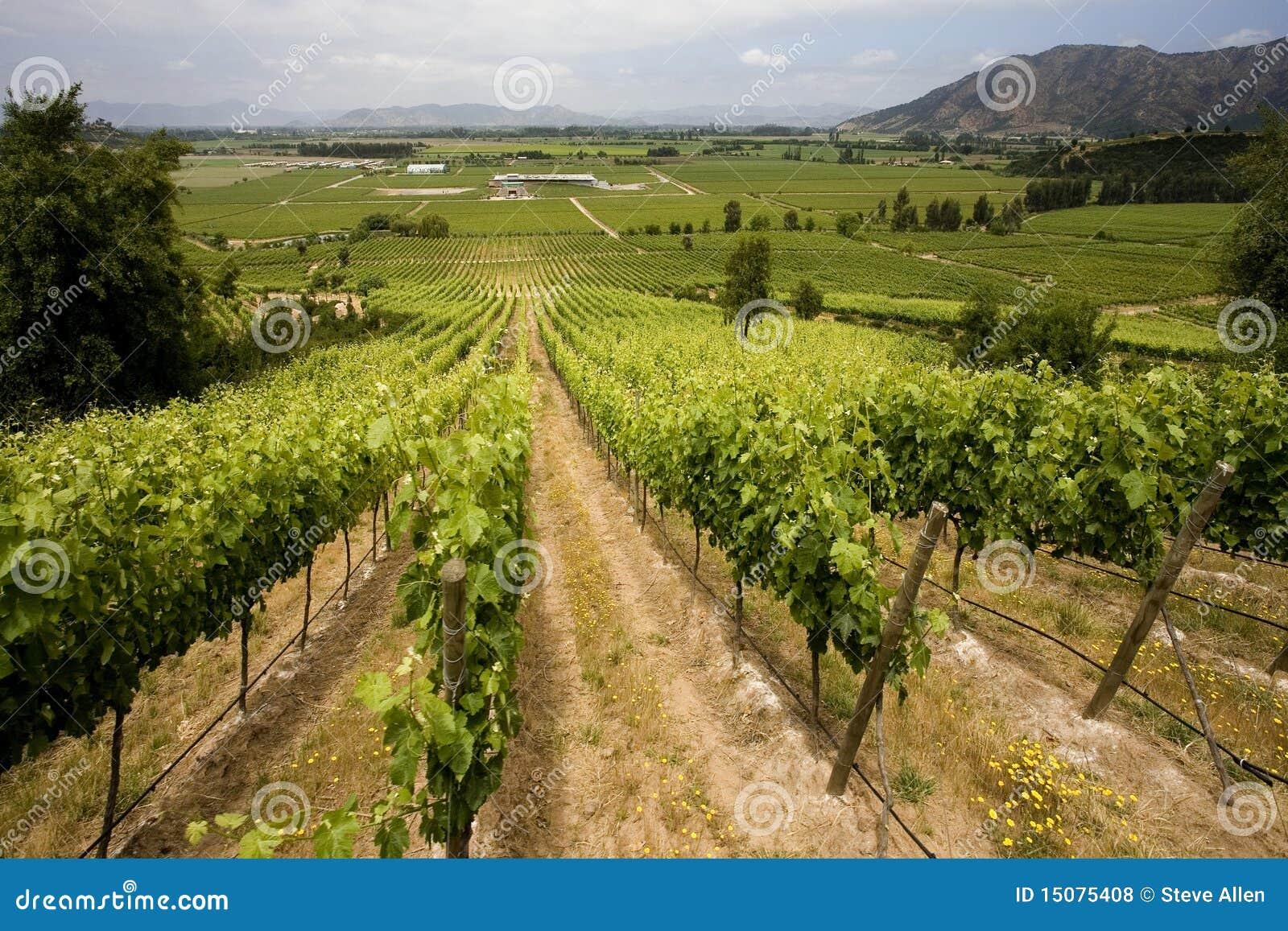 Chile vingårdar