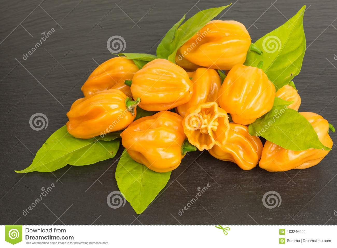 Chili pepper habaneros stock photo  Image of healthy - 103246994