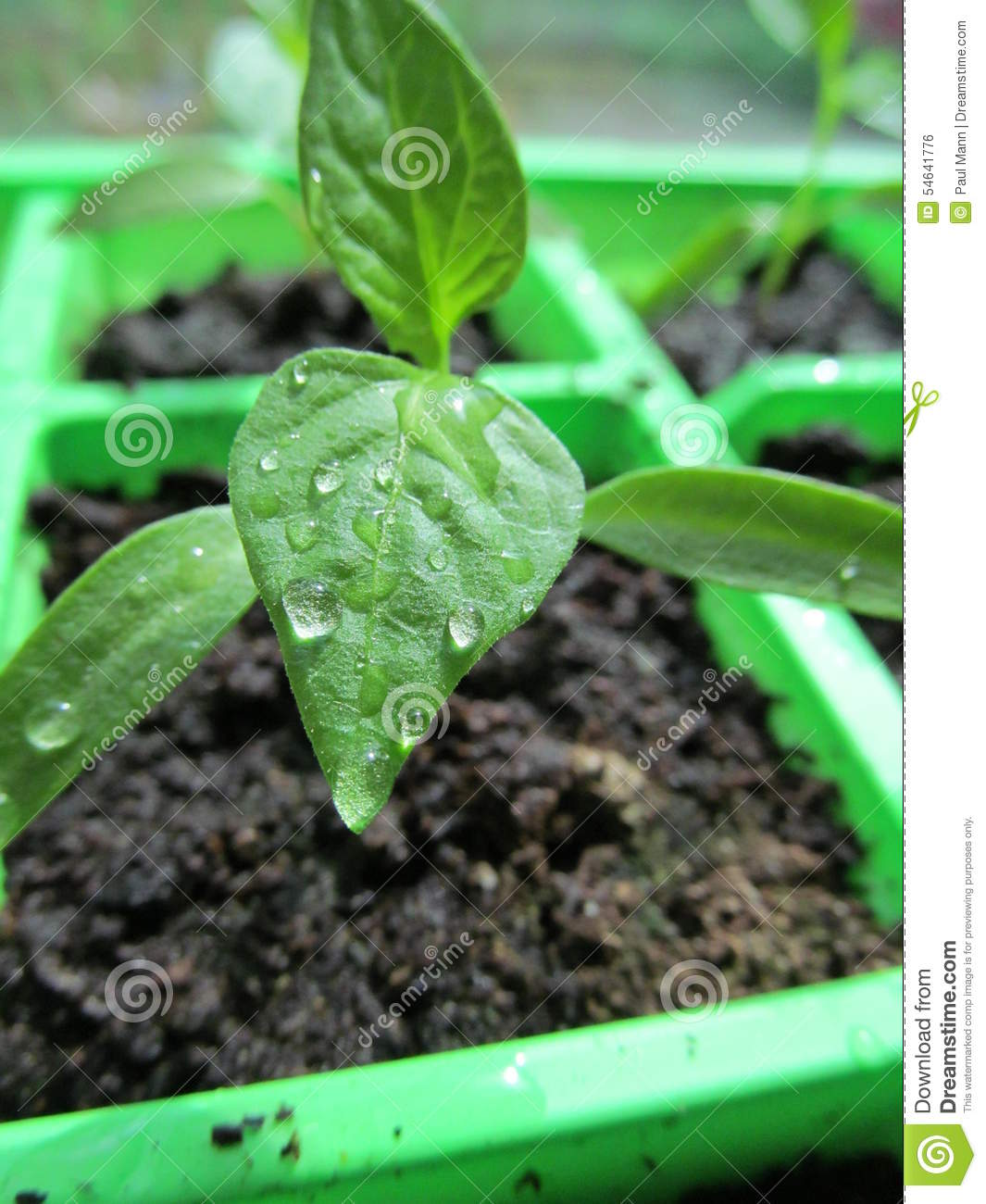 the insecticidal potential of chili pepper Field cage and open field experiments were conducted to evaluate the insecticidal potential of nine  asteraceae), chili pepper, capsicum.