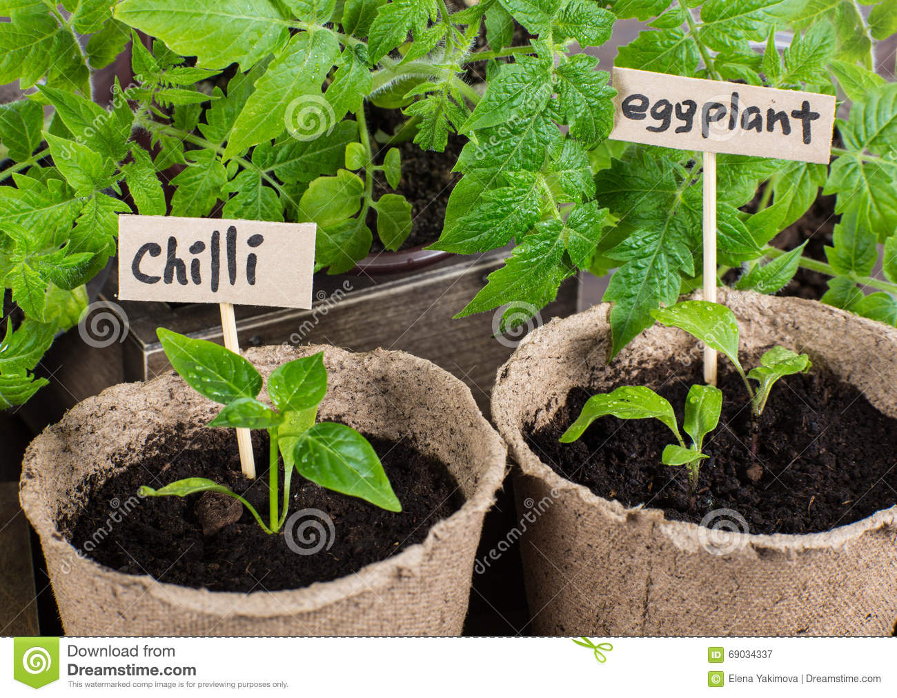 How to Grow Eggplants in Pots recommend
