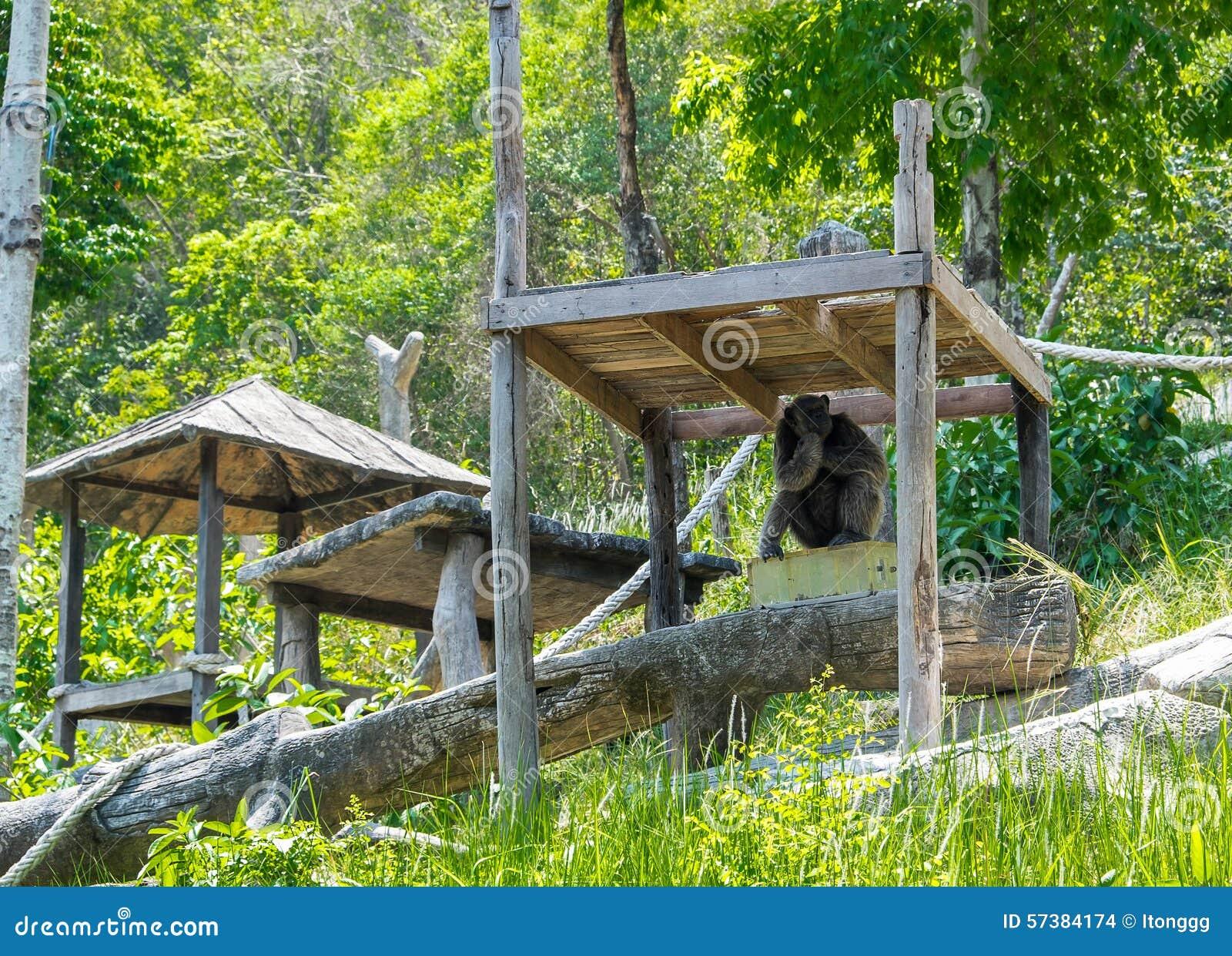 Chimpanseezitting in de Dierentuin