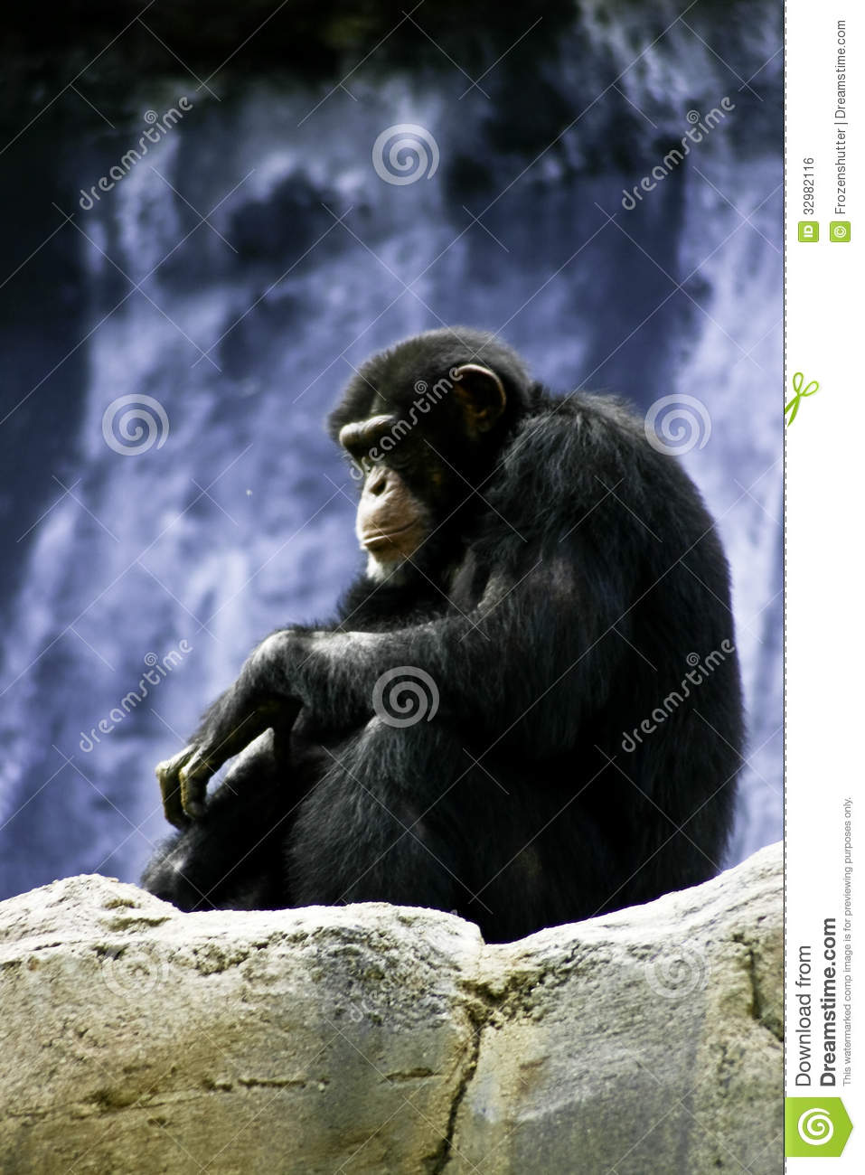 """""""Mary"""" the chimp, sitting on a bench with a pipe, ca. 1940 ...  