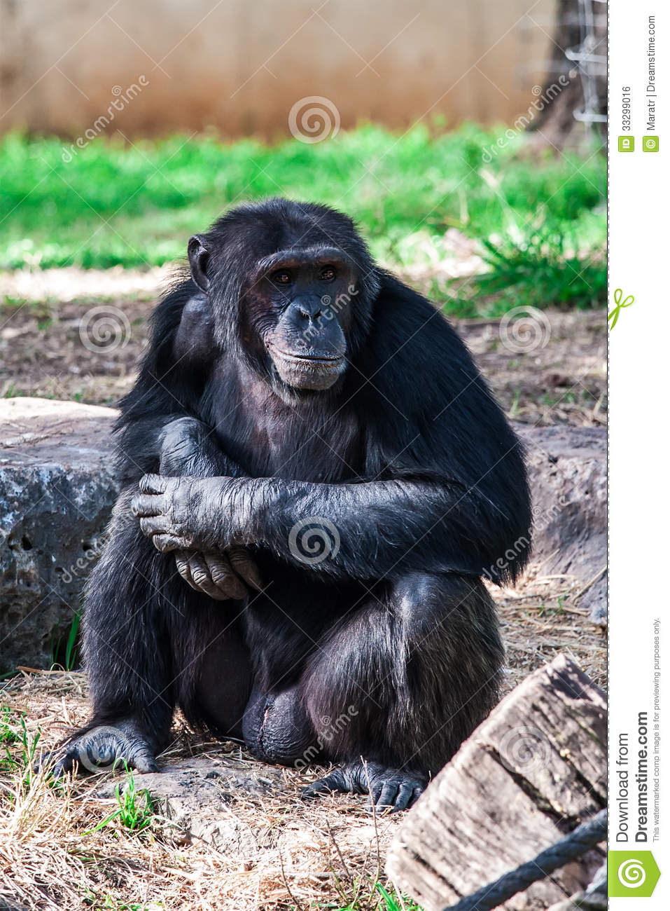 301 Moved Permanently  |Chimp Sitting