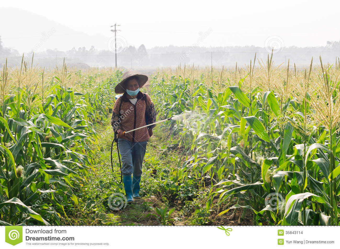 china pest In china's epic 7,000 year history of rice farming, all but the last 30 has   integrated pest management (ipm) is a new (and fancy sounding).
