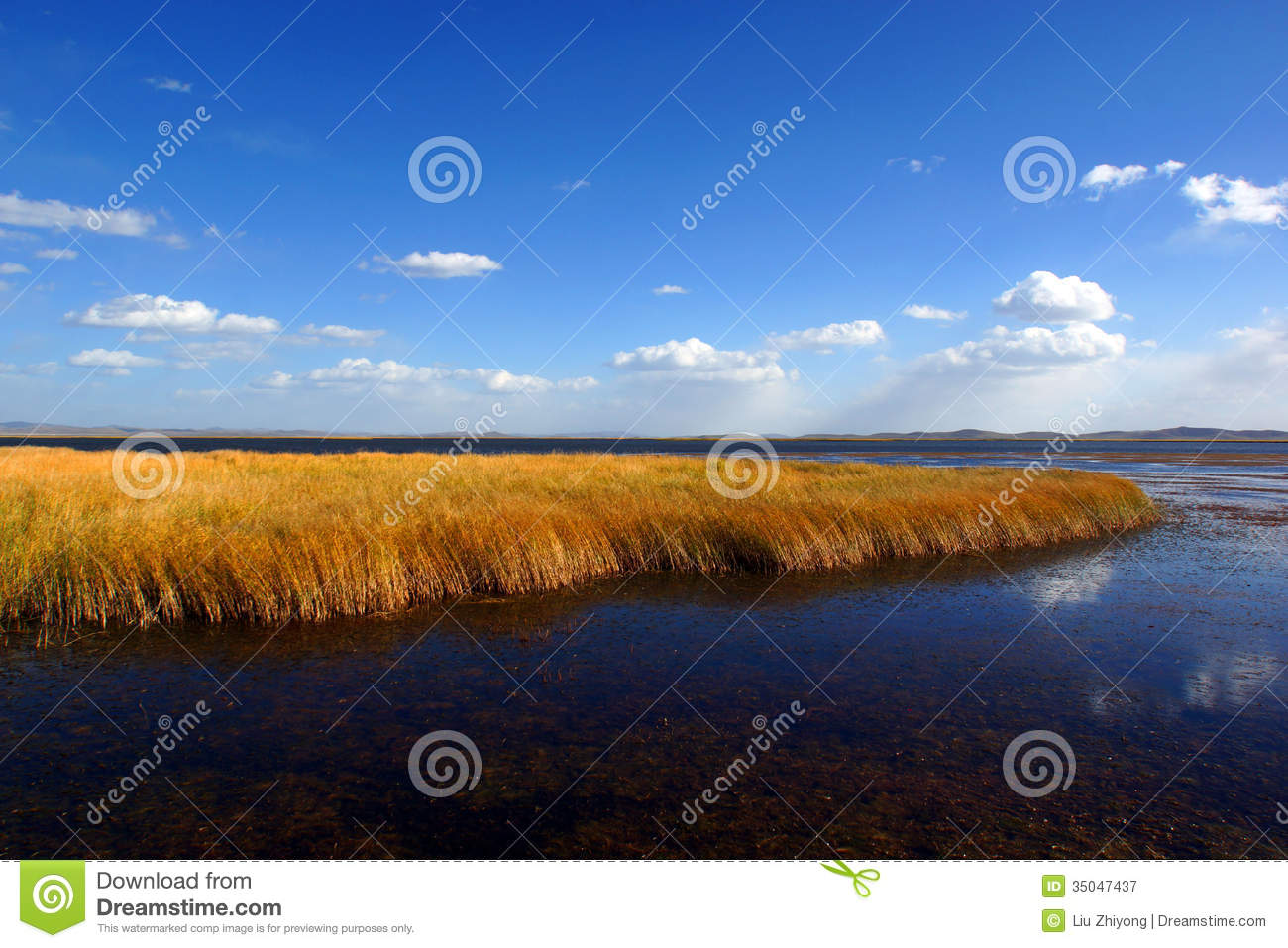 China Flower Lake Wetland Royalty Free Stock Photography ...