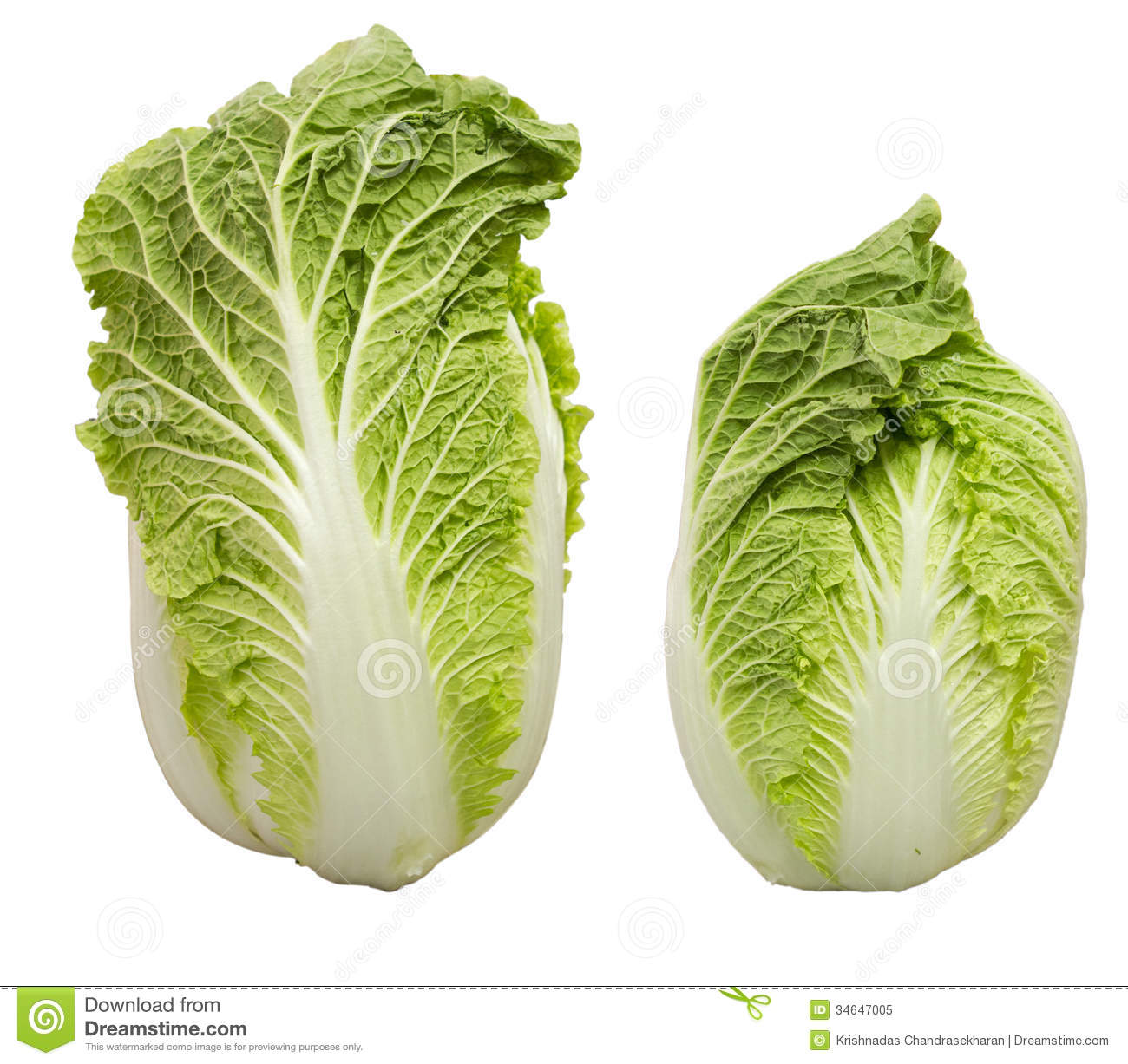 chineese cabbage royalty free stock photo image 34647005 hot cup of coffee clipart hot cup of coffee clipart