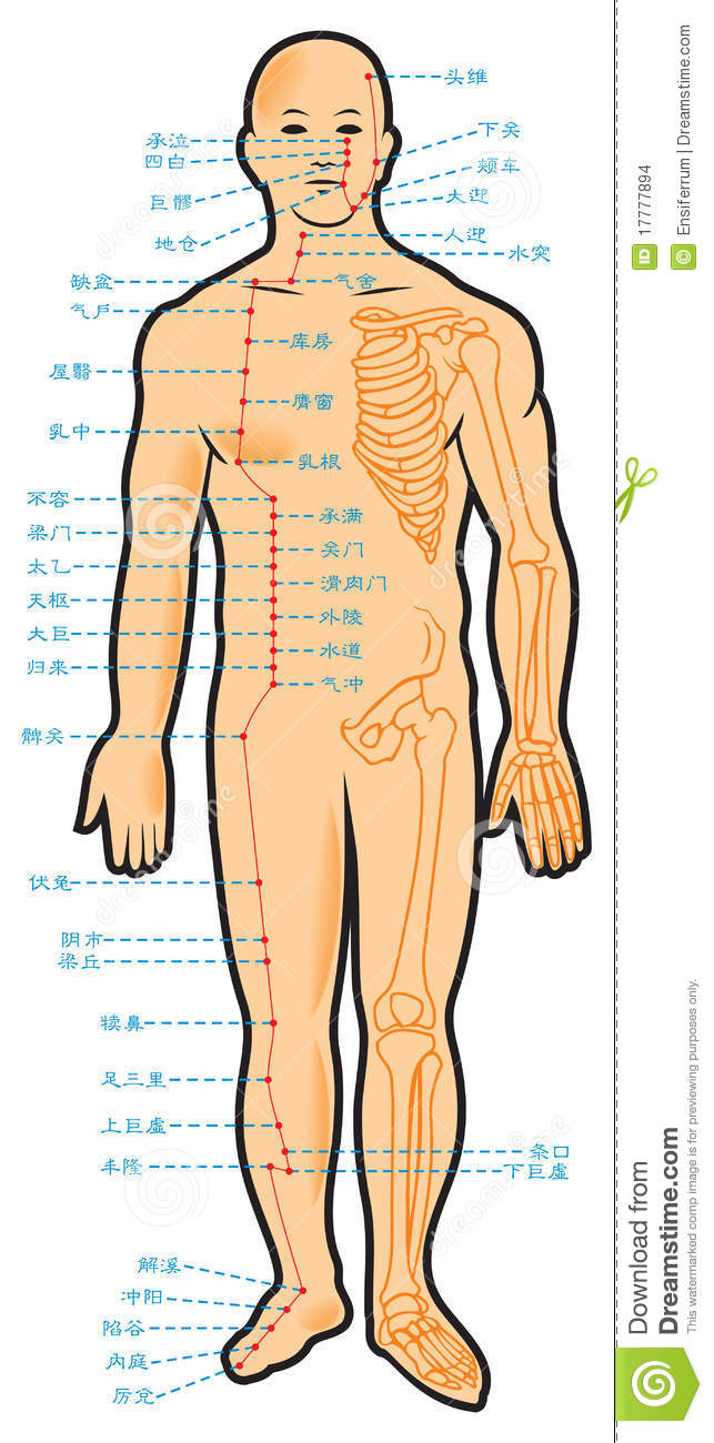 Chinese acupuncture scheme stock vector. Illustration of ...