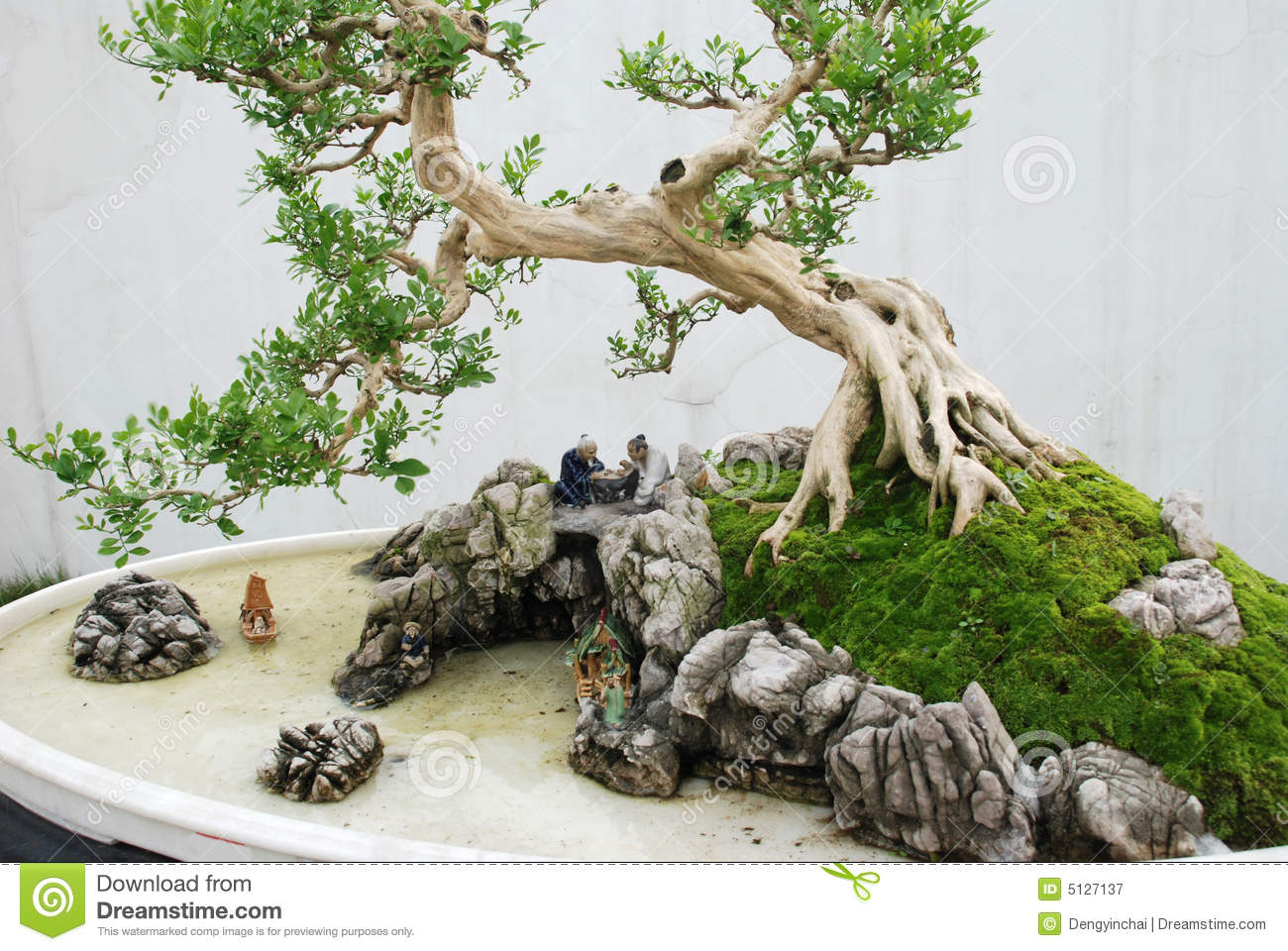 The chinese bonsai royalty free stock photography image for Bonsai de jardin